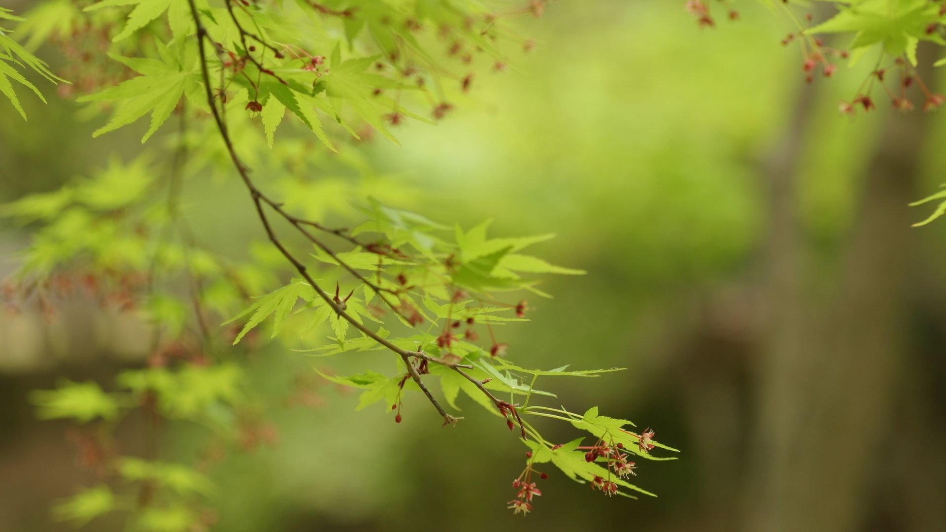 Tree Branch Pic