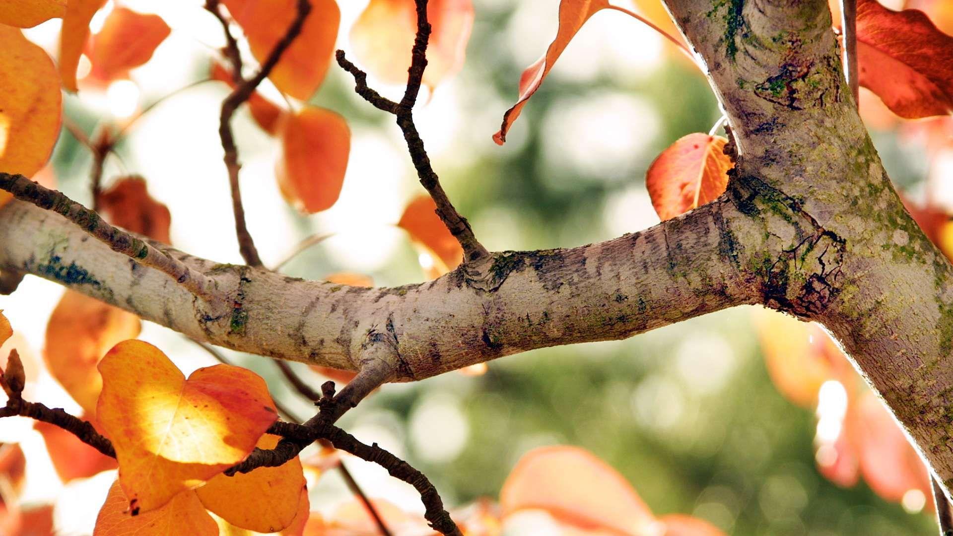 Tree Branch full hd 1080p wallpaper