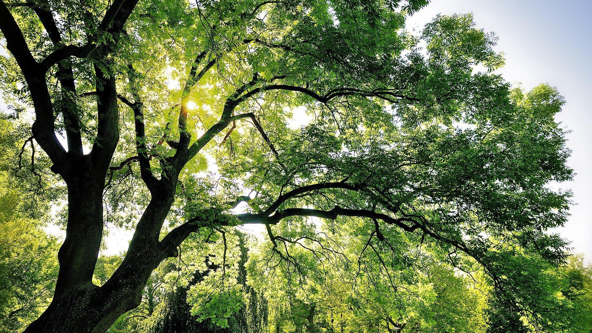 Tree Branch wallpaper photo