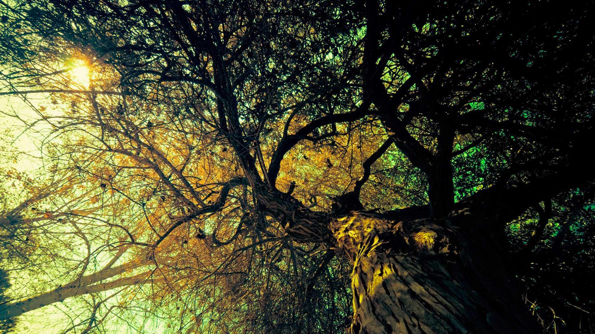 Tree Branch Nice Wallpaper