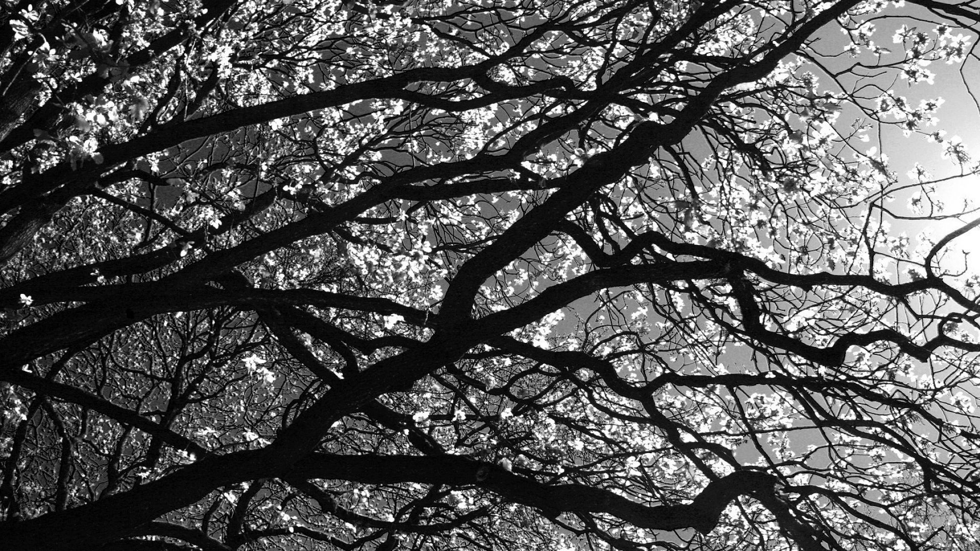Tree Branch HD Wallpaper