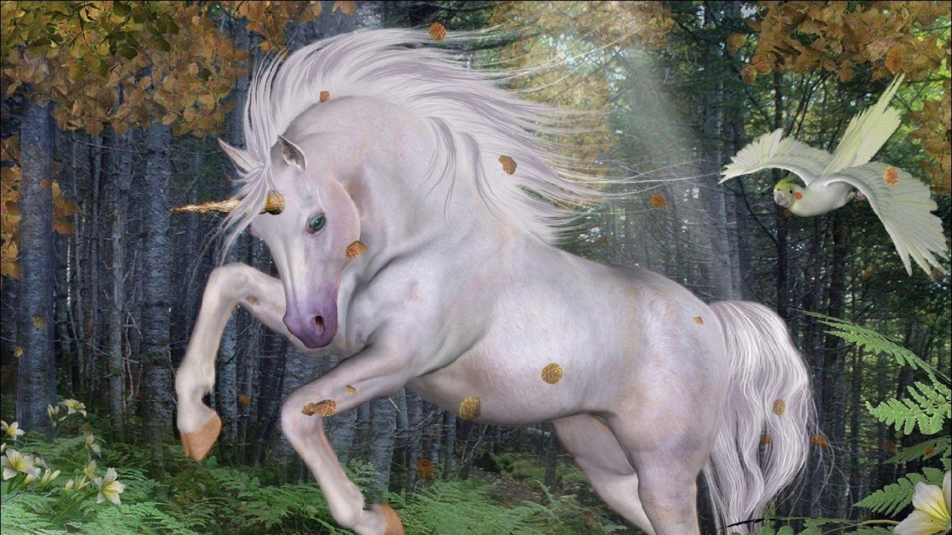 Unicorn full hd wallpaper for laptop