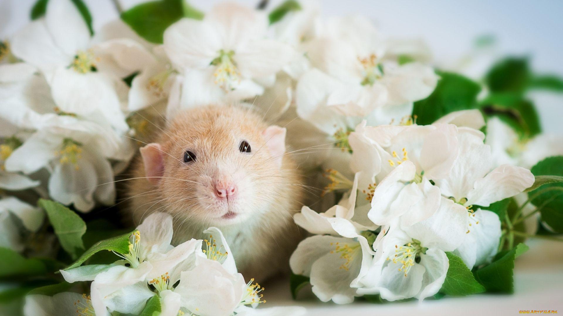 White Metal Rat background wallpaper