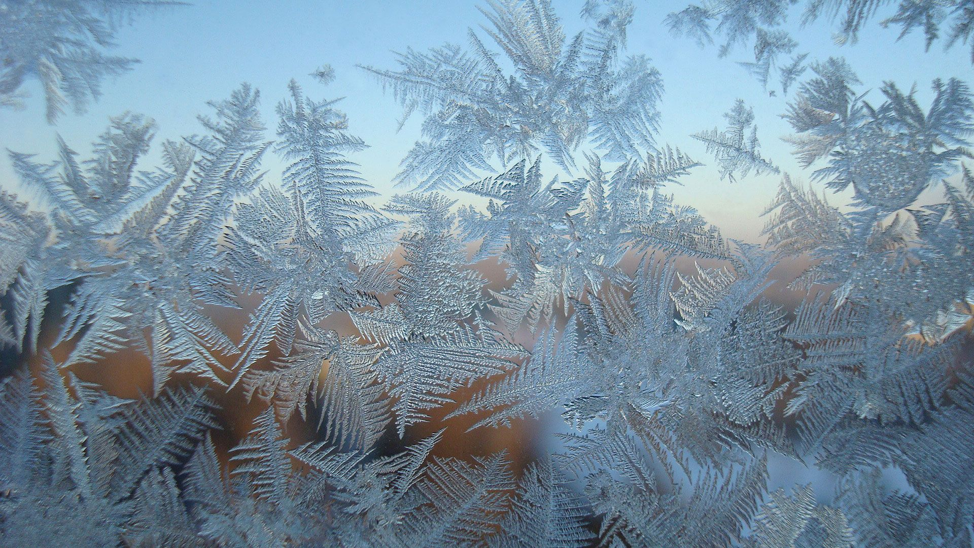 Winter Patterns On The Window Image