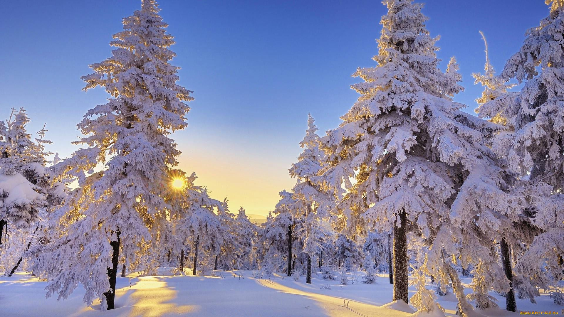 Winter Snow Scenes free download wallpaper