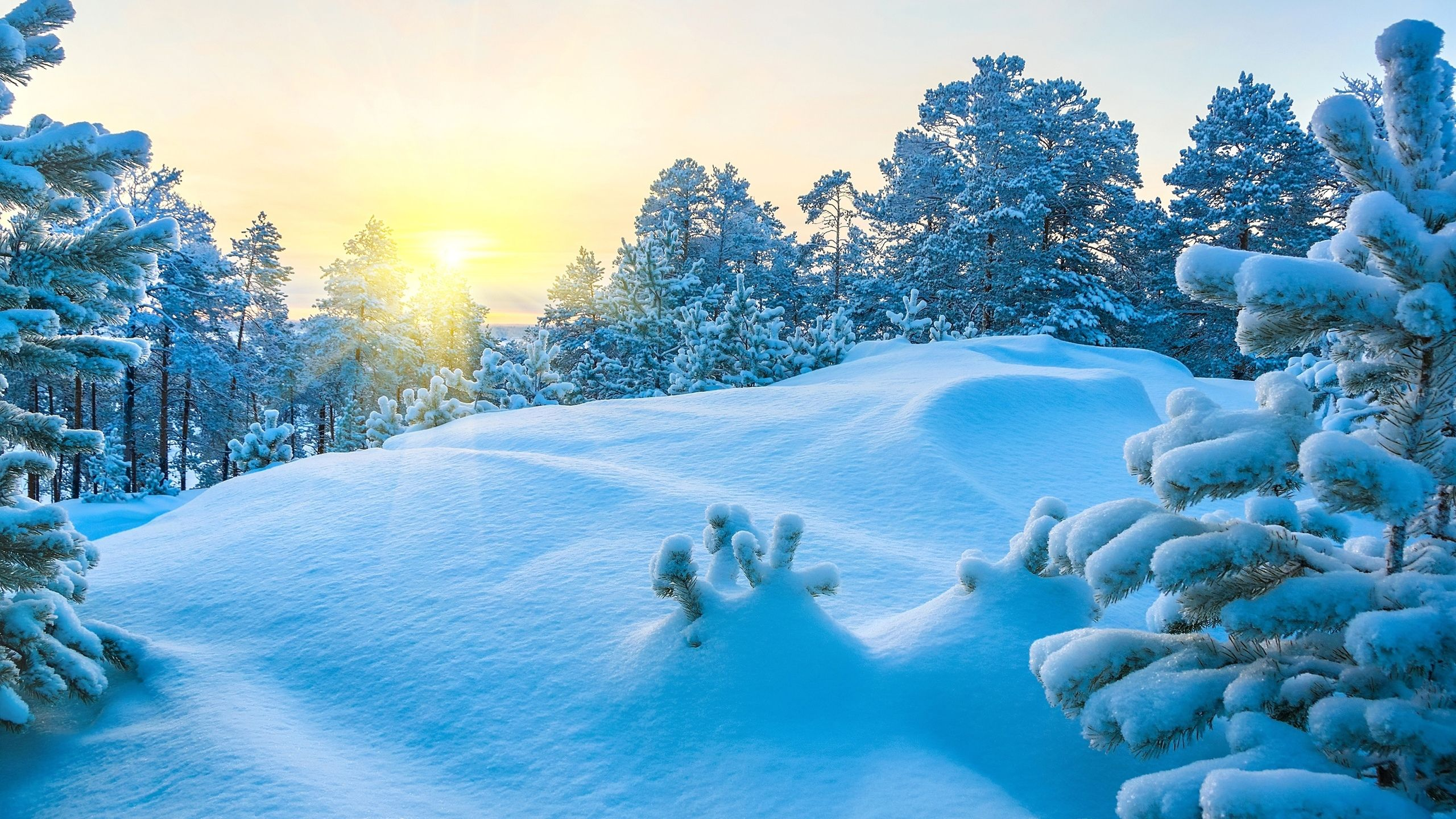 Winter Snow Scenes hd wallpaper 1080p for pc