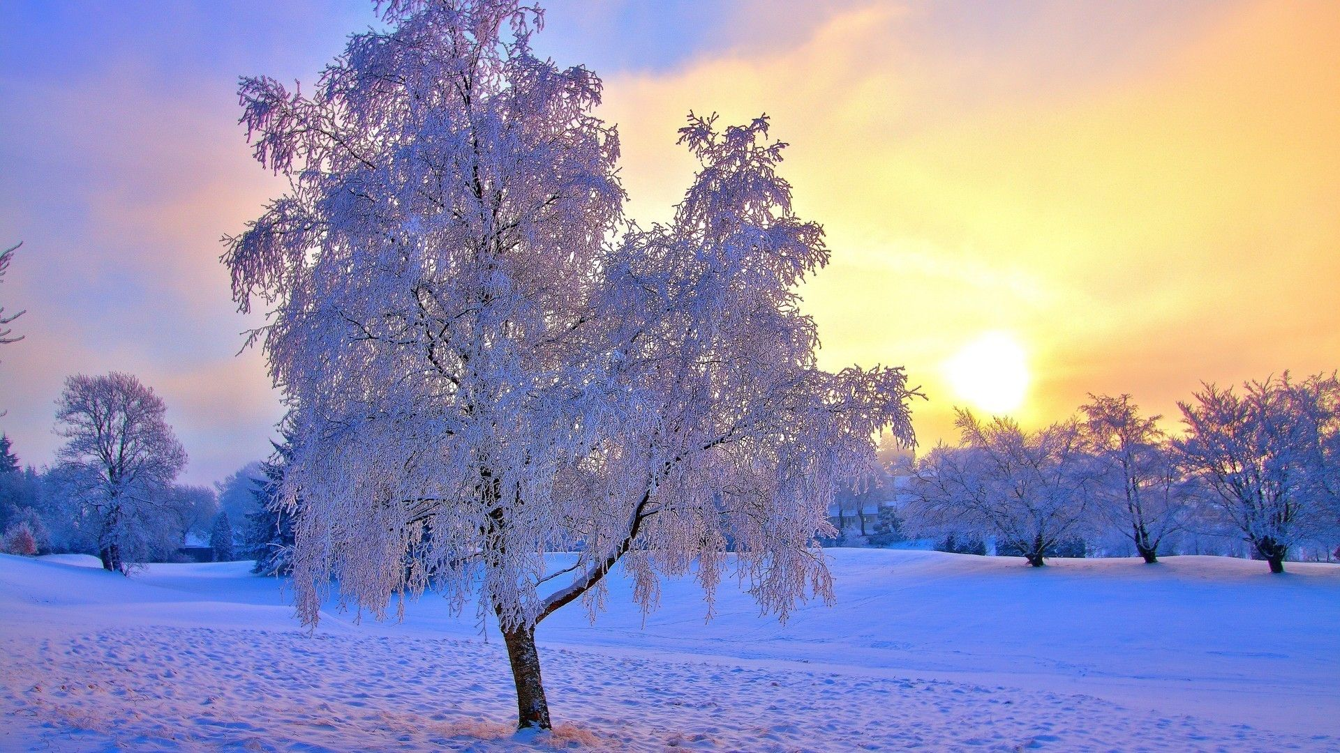 Winter Snow Scenes Wallpaper and Background