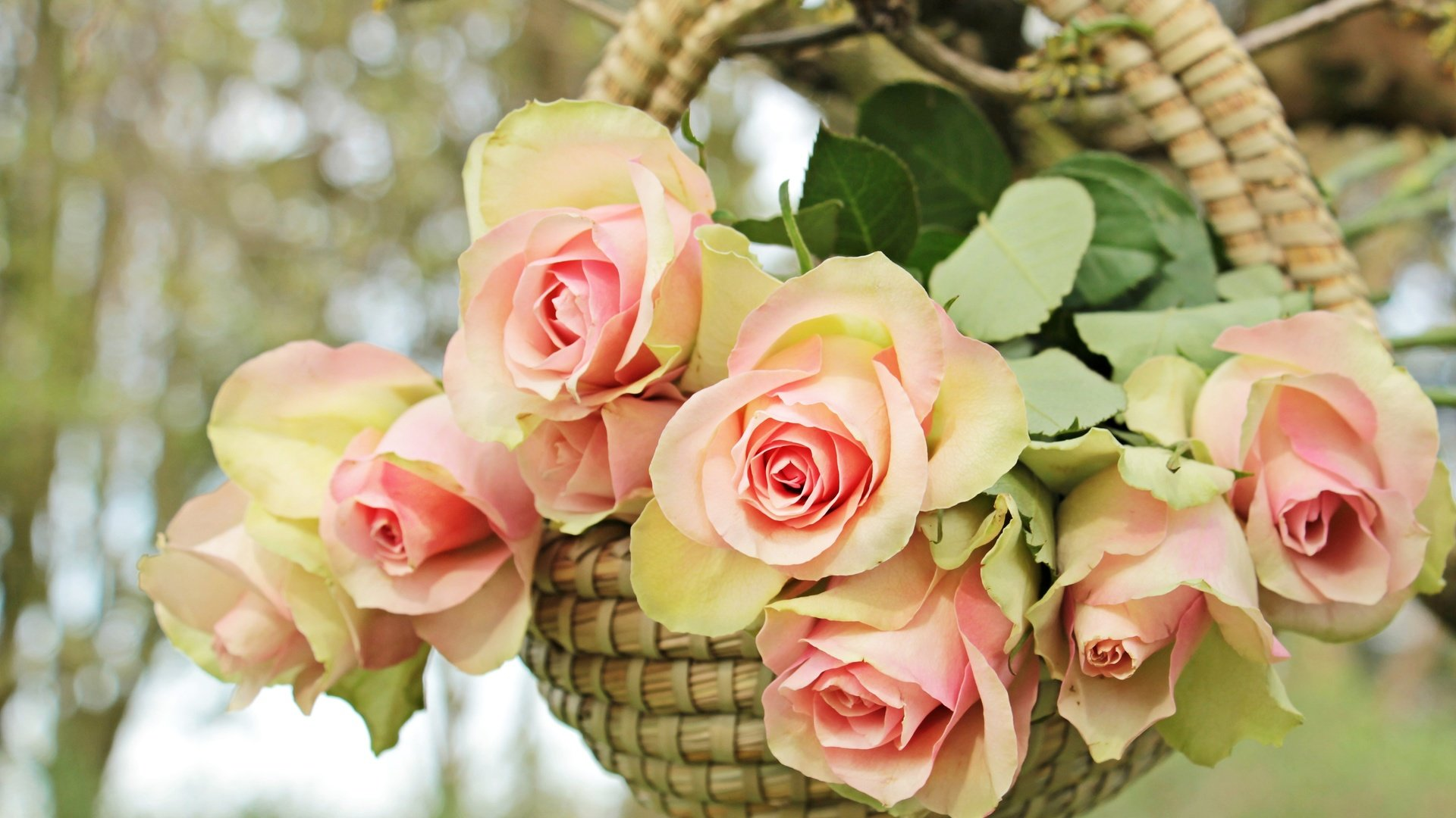 Basket With Flowers image hd