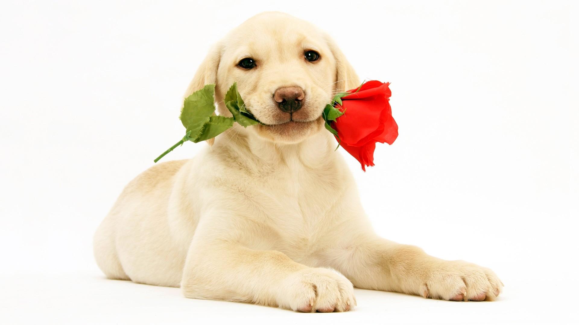 Cute Women's Day hd image download