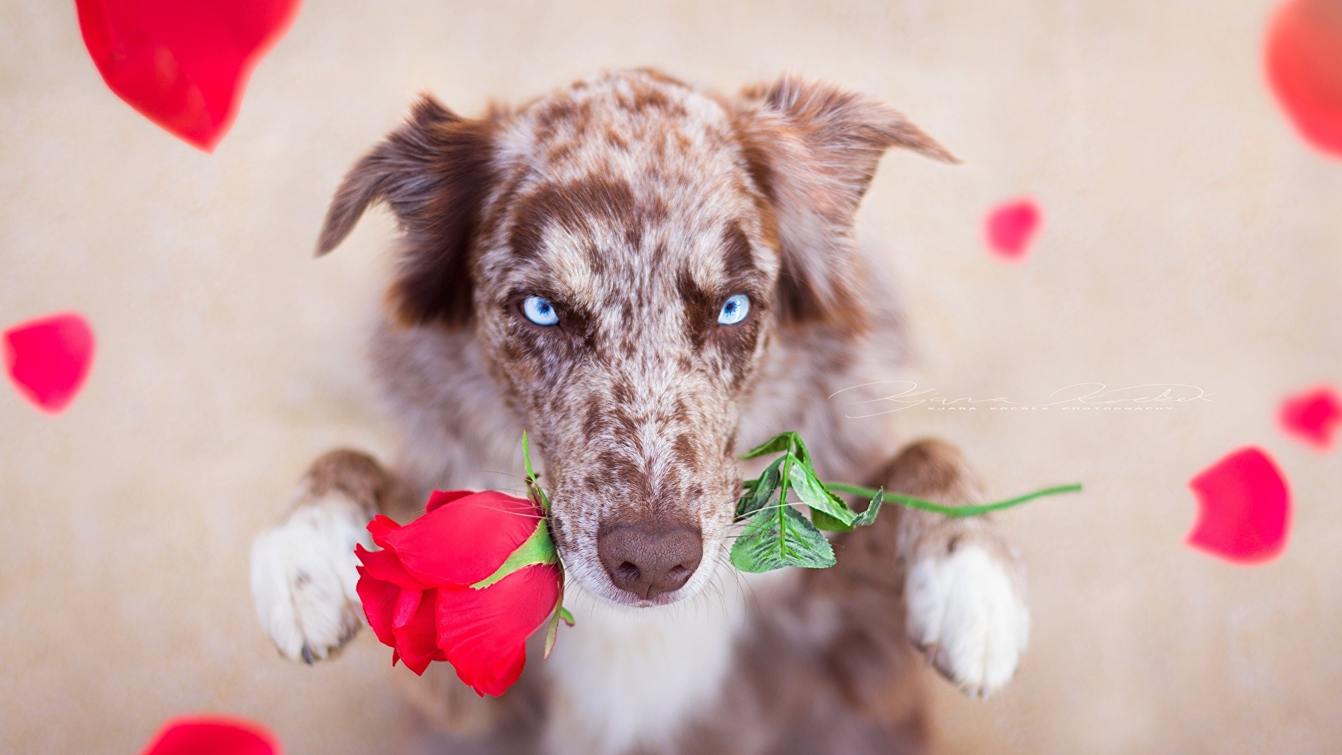 Cute Women's Day image hd