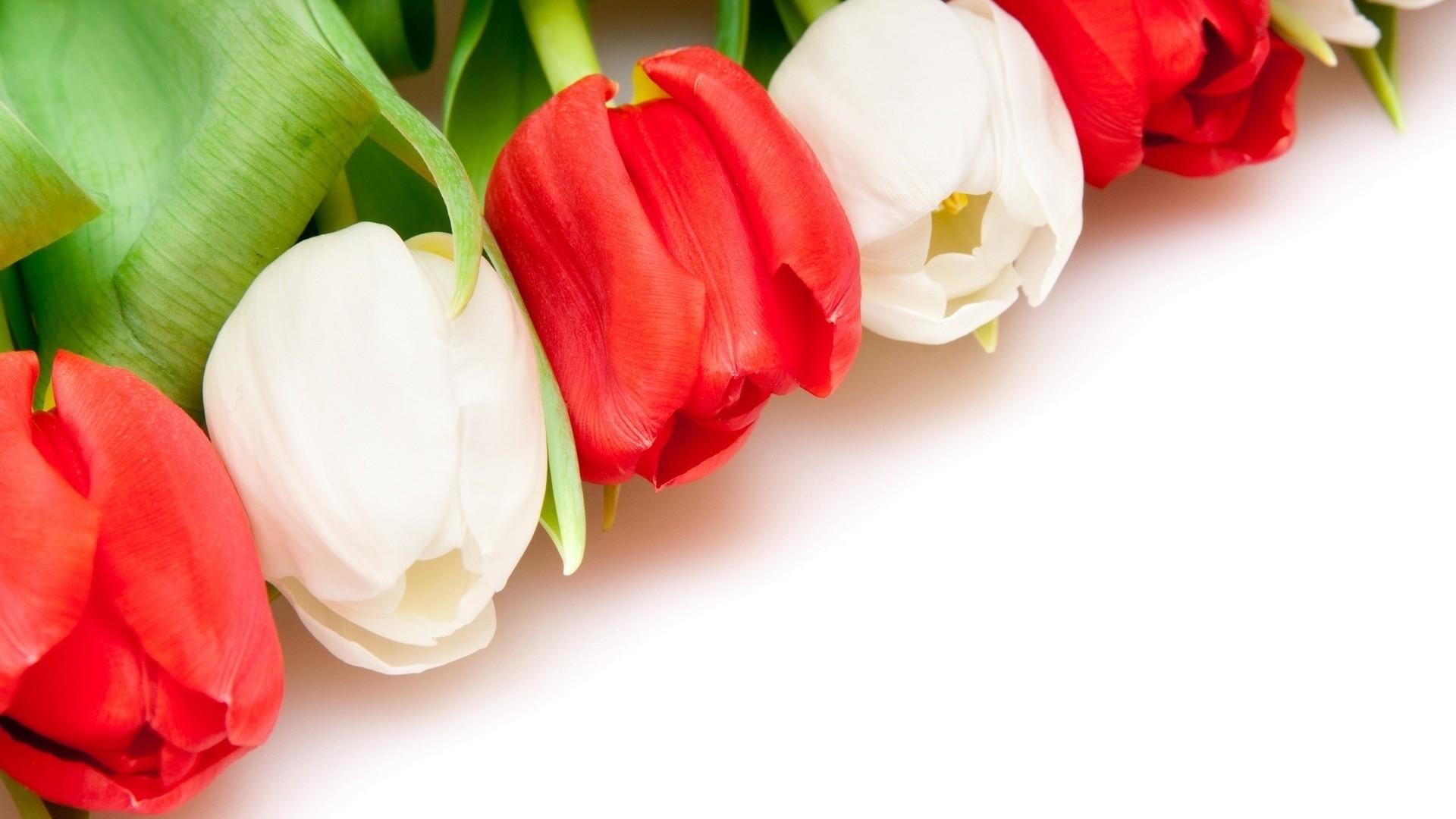 International Women's Day Flowers download image