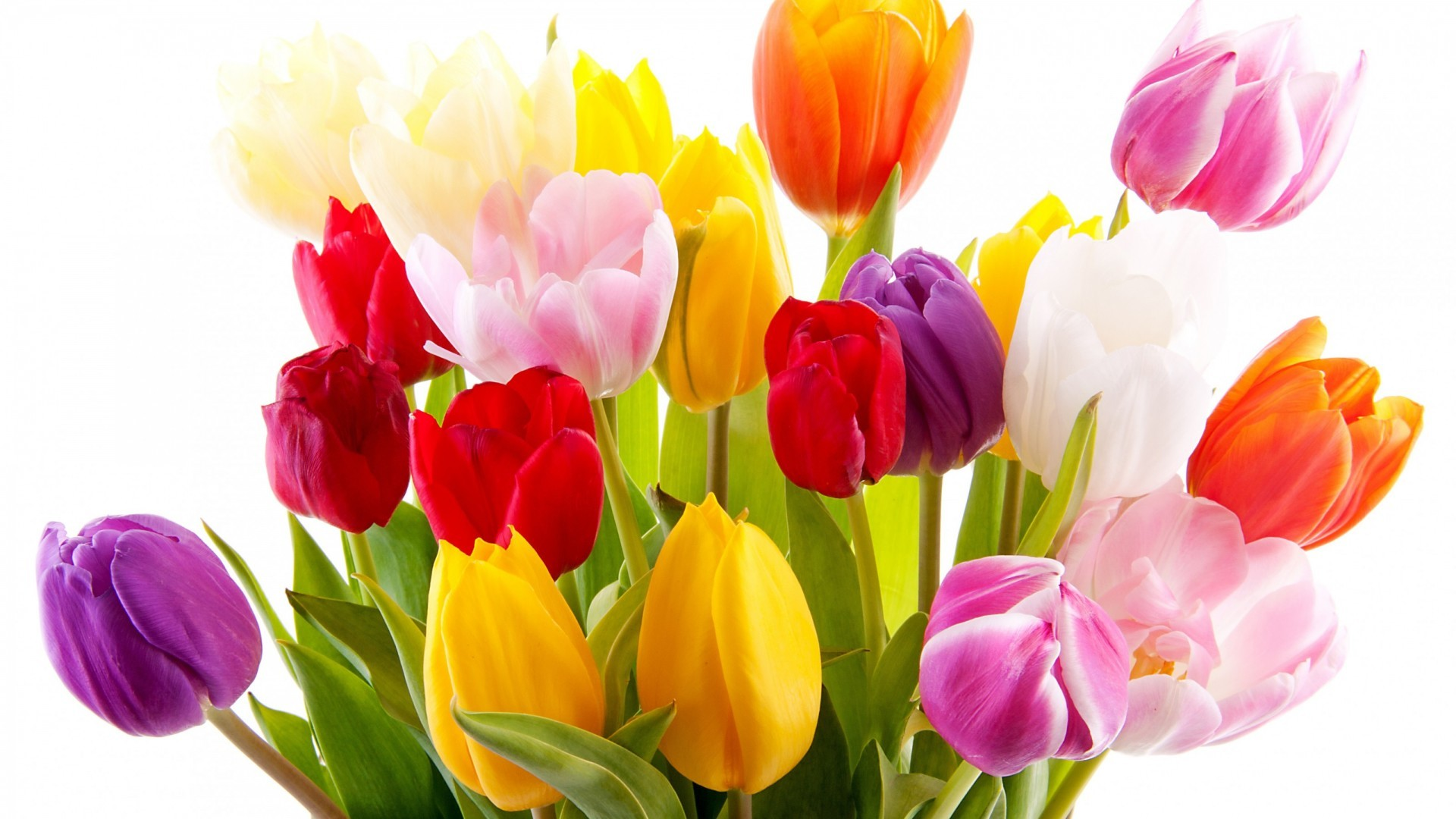 International Women's Day Flowers high quality image