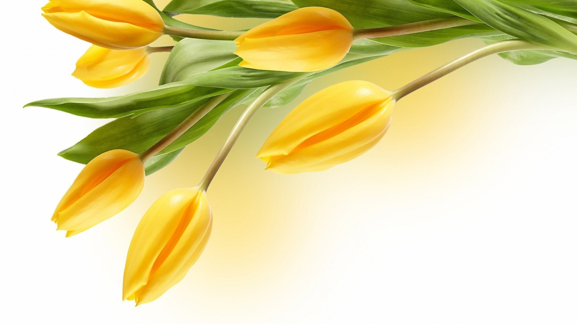 International Women's Day Flowers desktop image