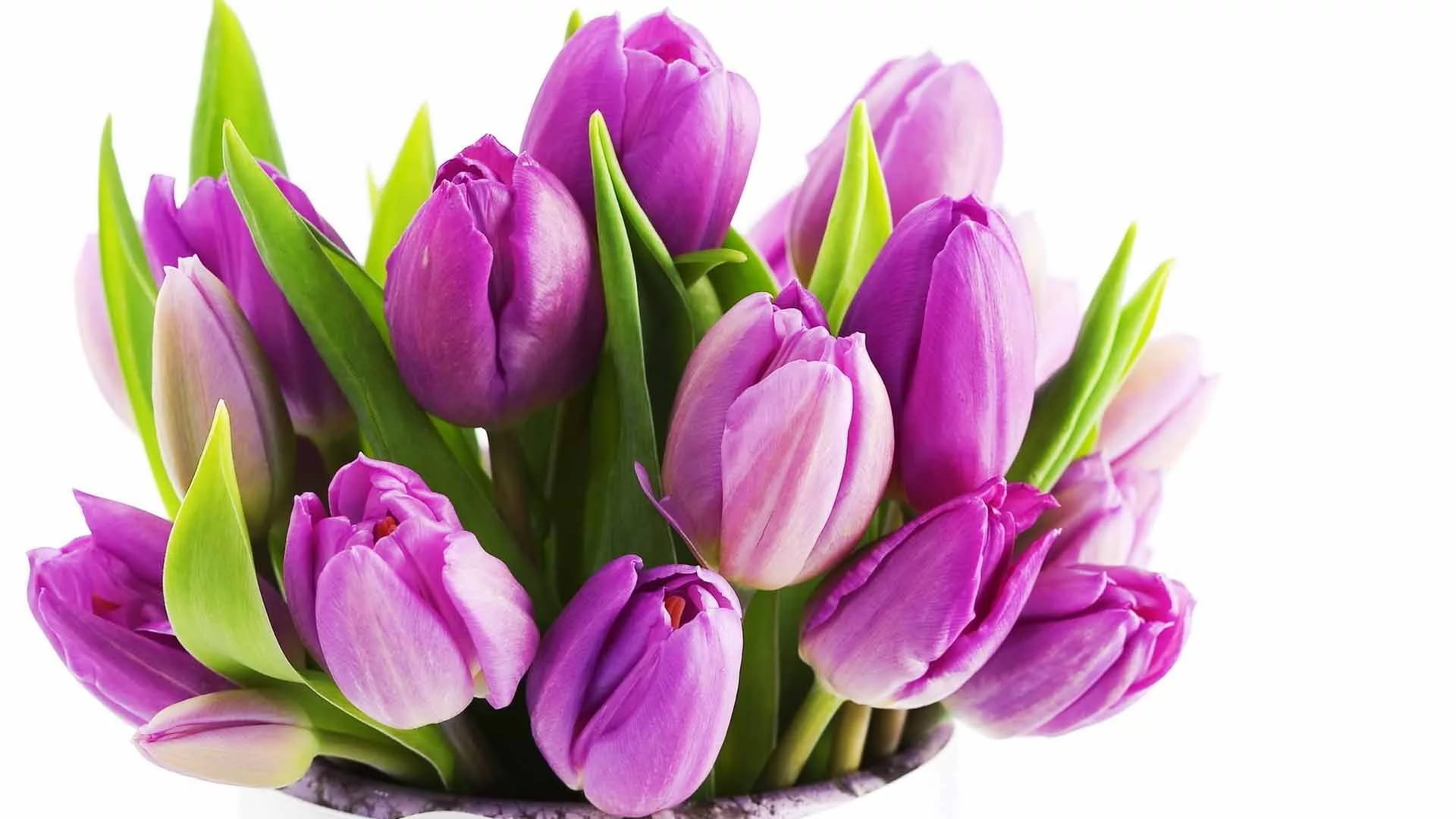 International Women's Day Flowers background wallpaper
