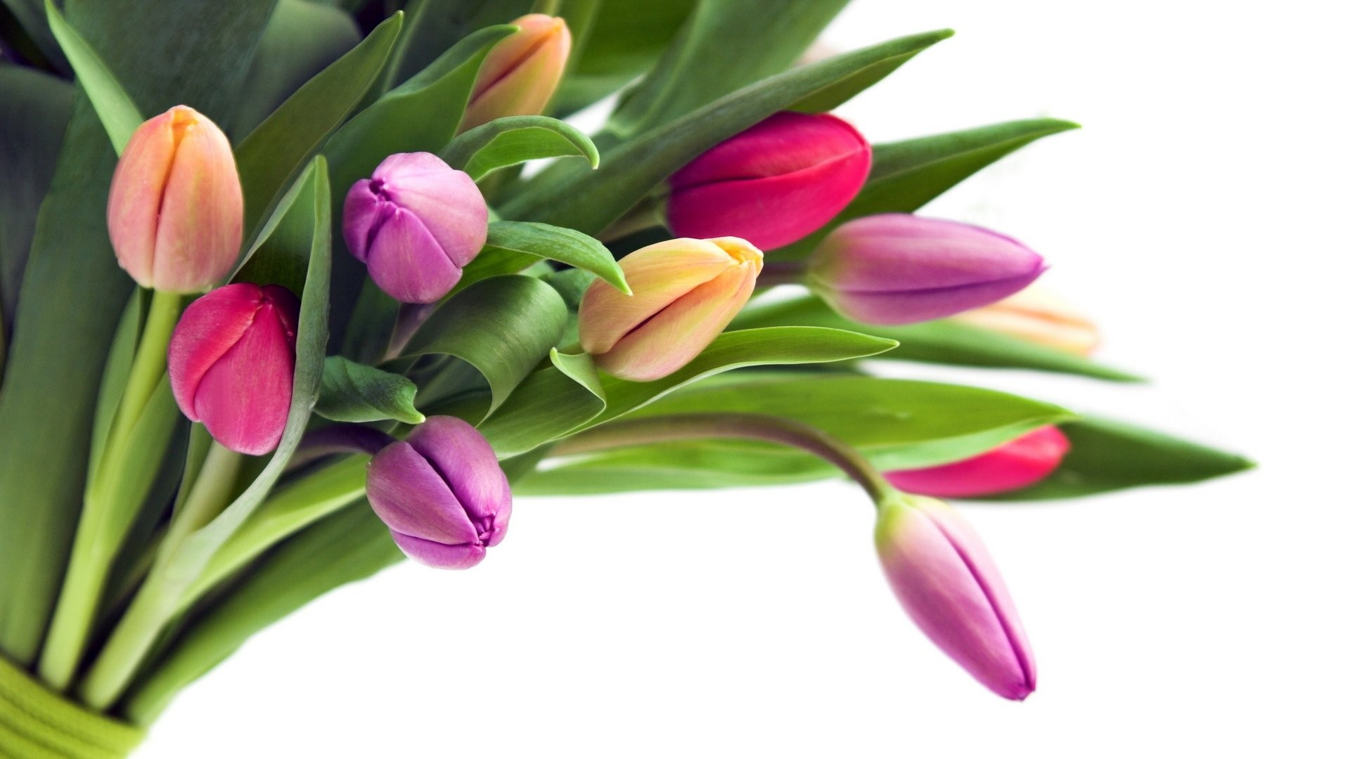 International Women's Day Flowers image free download