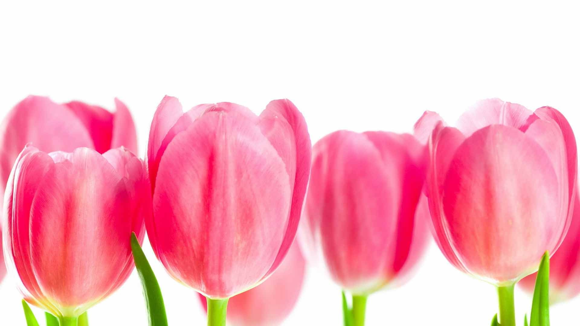 International Women's Day Flowers background