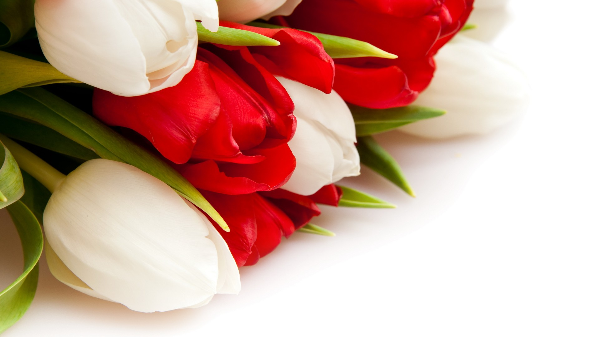International Women's Day Flowers download image