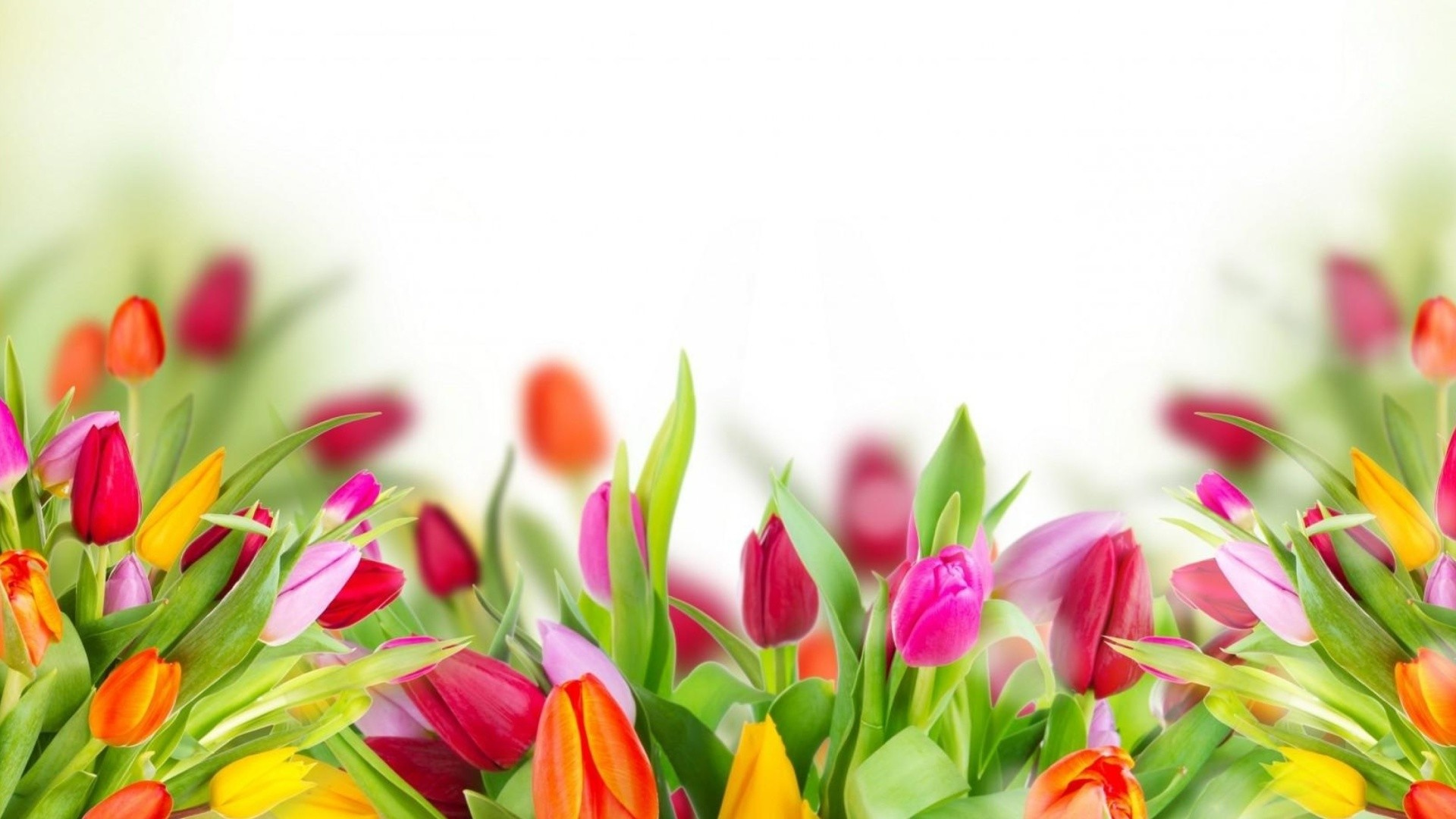 International Women's Day Flowers hd image download