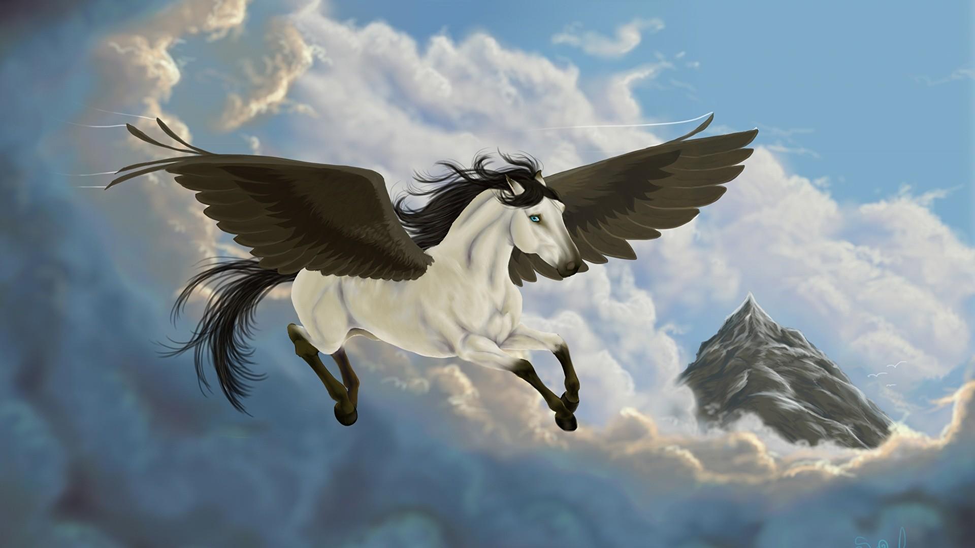 Pegasus Background