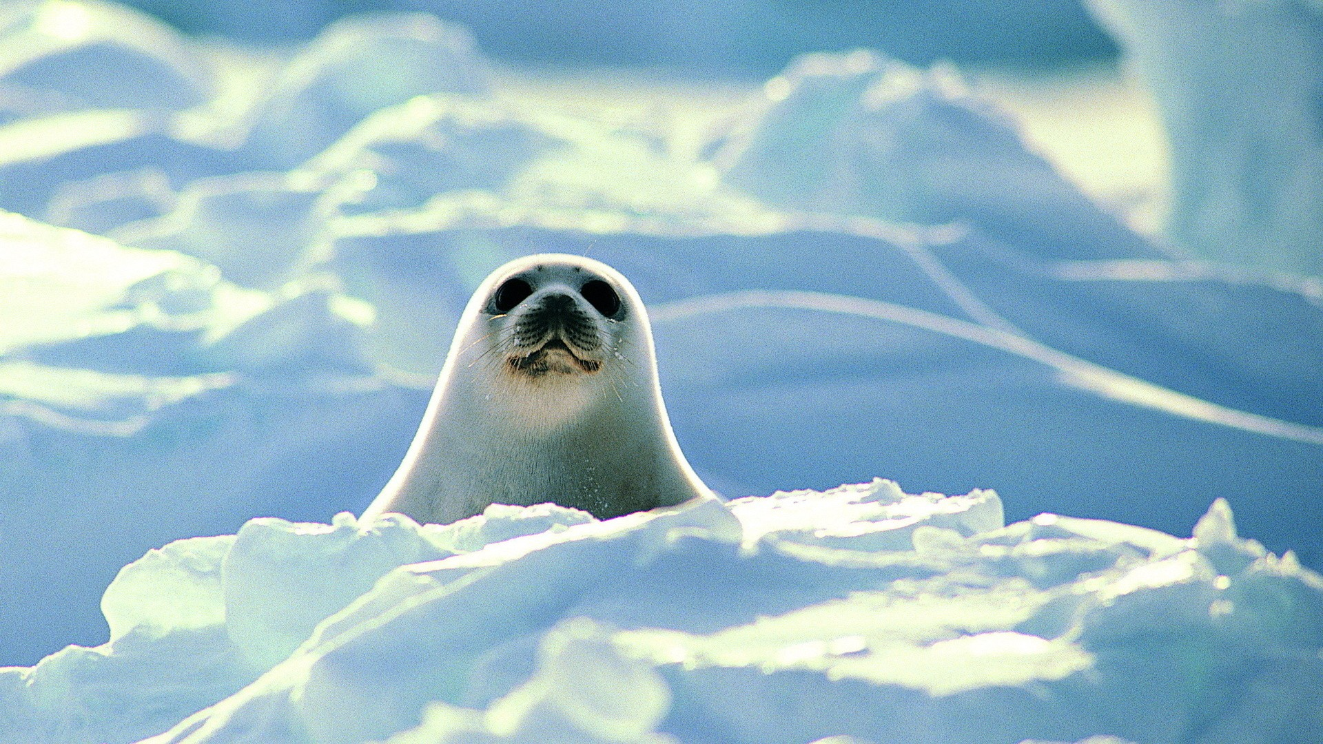 Seal Wallpaper Image