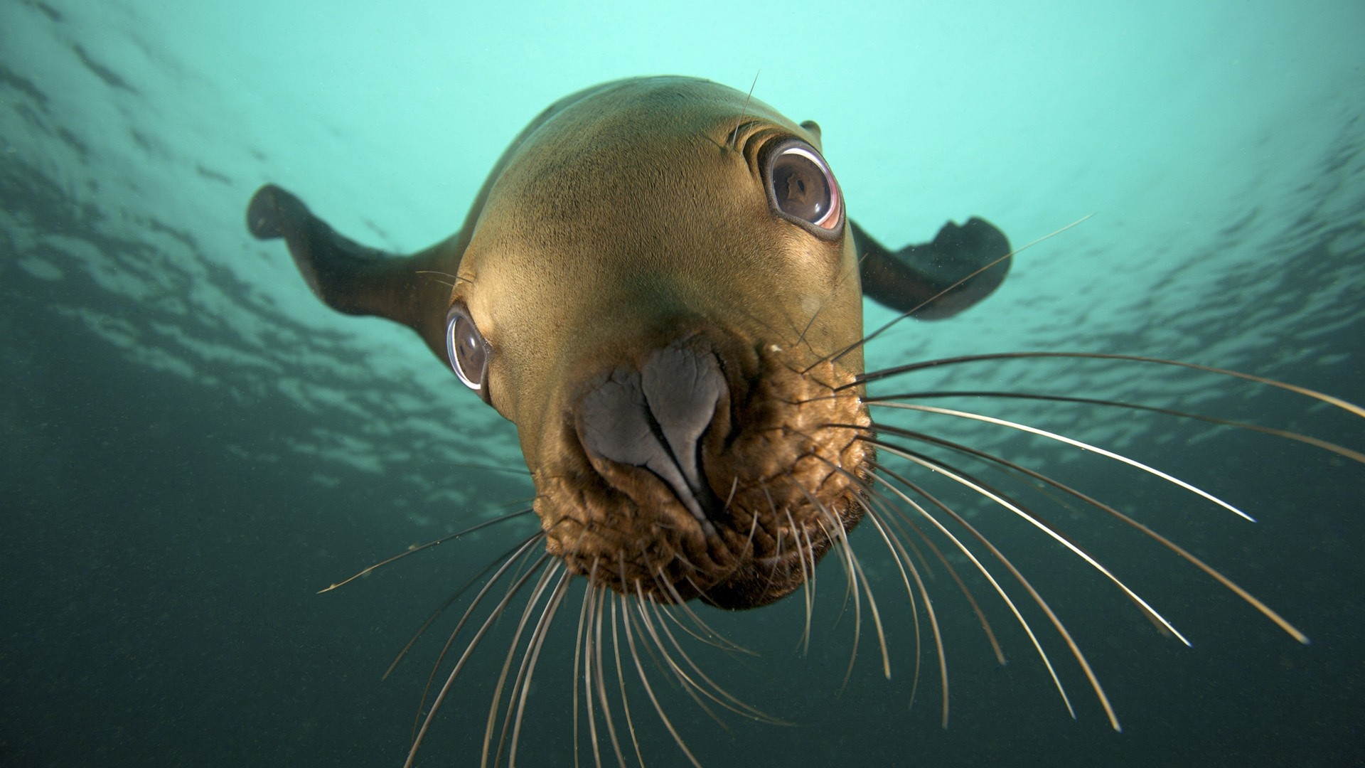 Seal High Quality