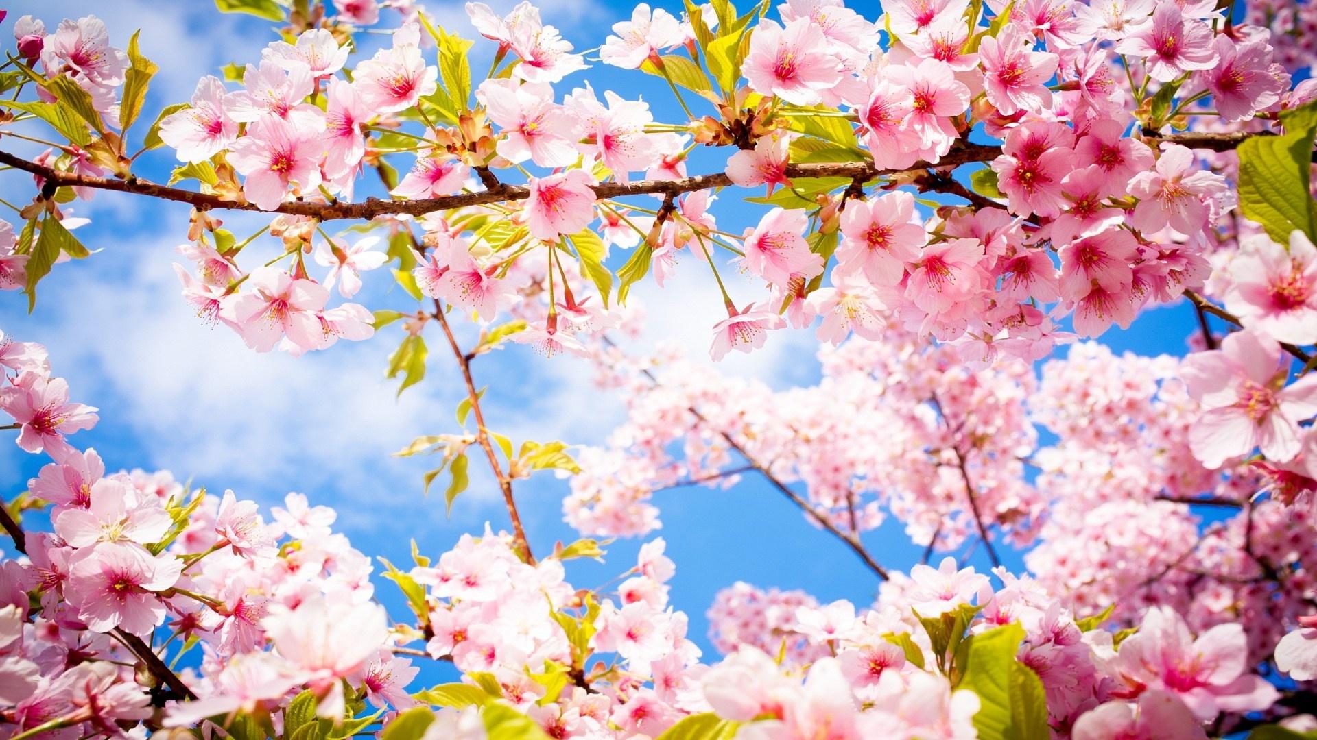 Springtime hd wallpaper download