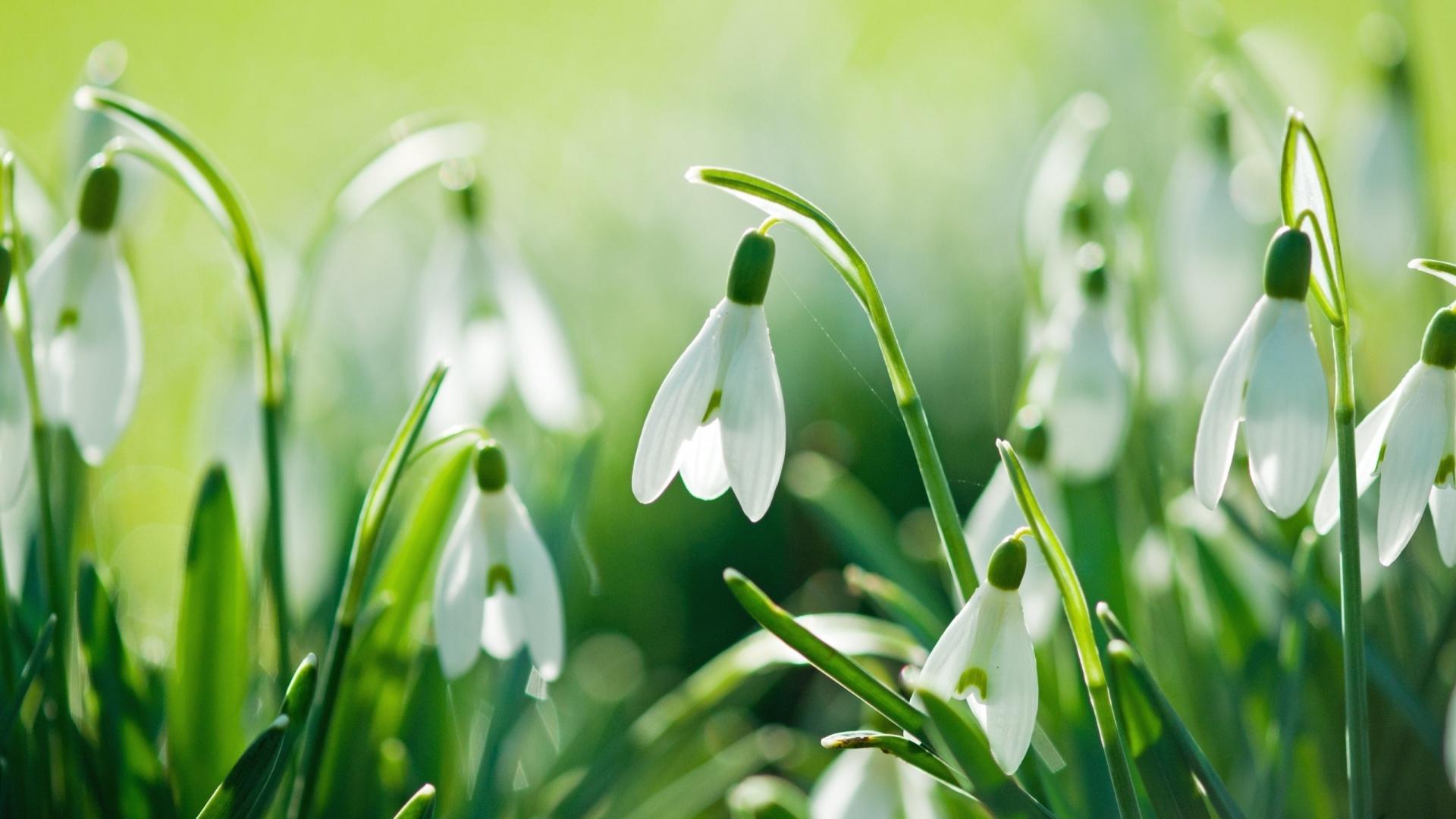 Springtime Image