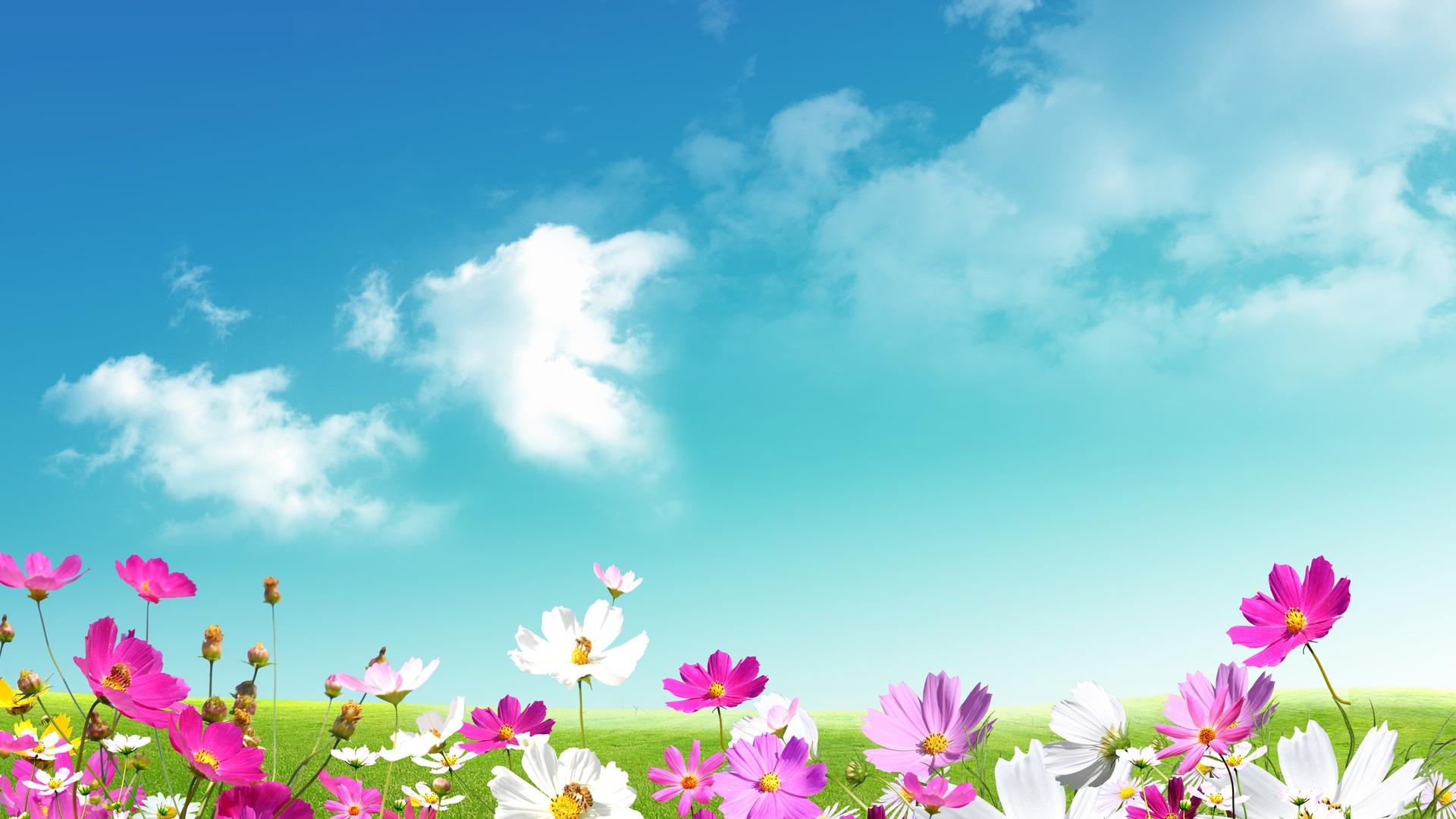 Springtime Background Wallpaper HD