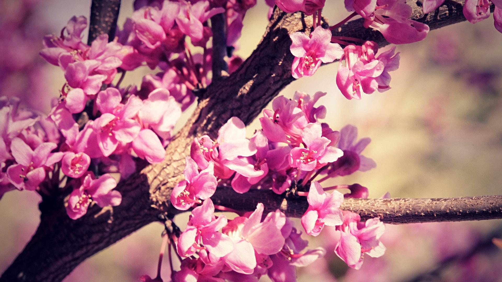 Springtime Free Desktop Wallpaper