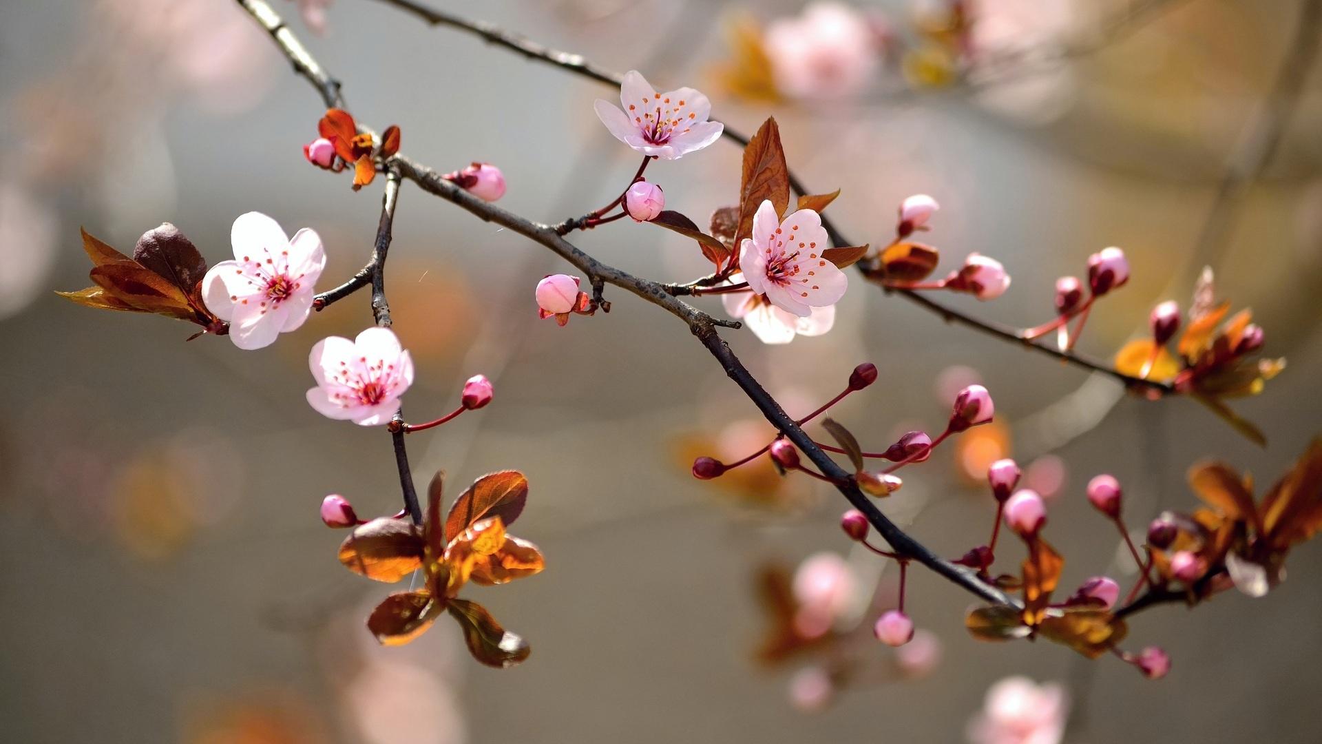 Springtime High Definition