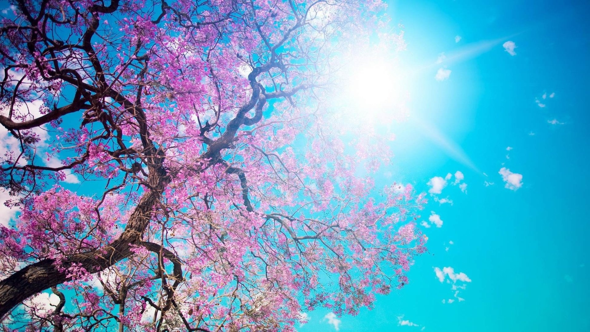Springtime hd wallpaper 1080