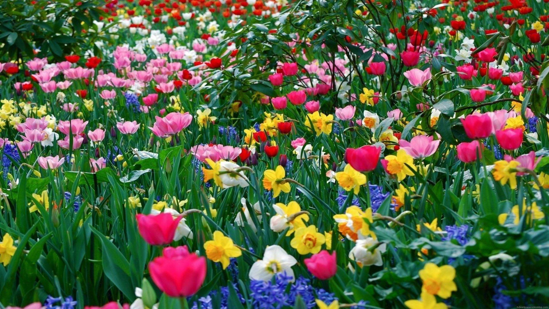 Springtime HD Wallpaper