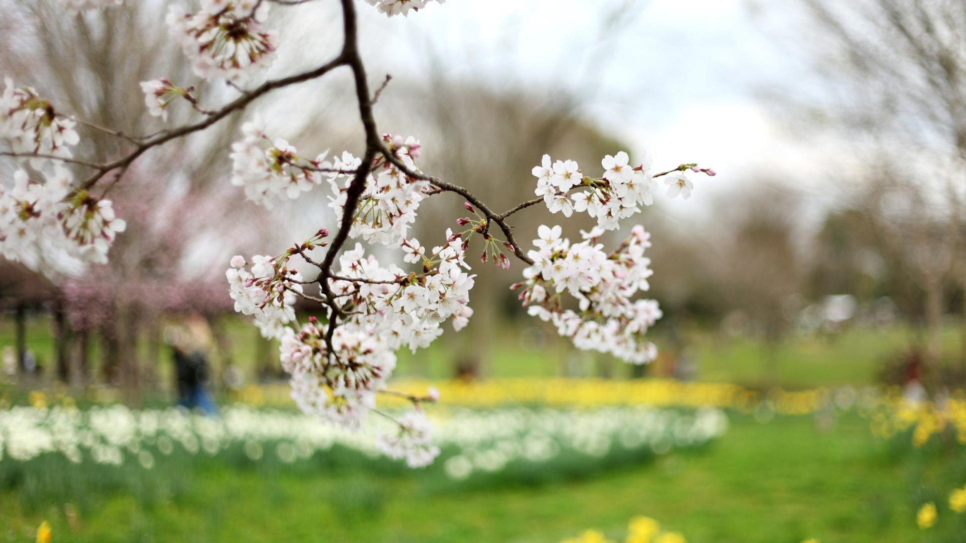 Springtime 1080p Wallpaper