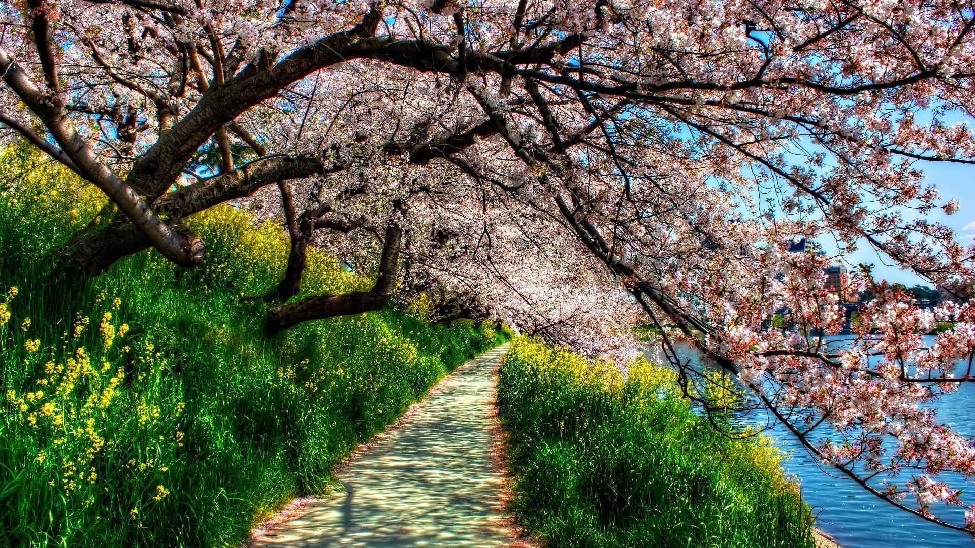 Springtime free download wallpaper