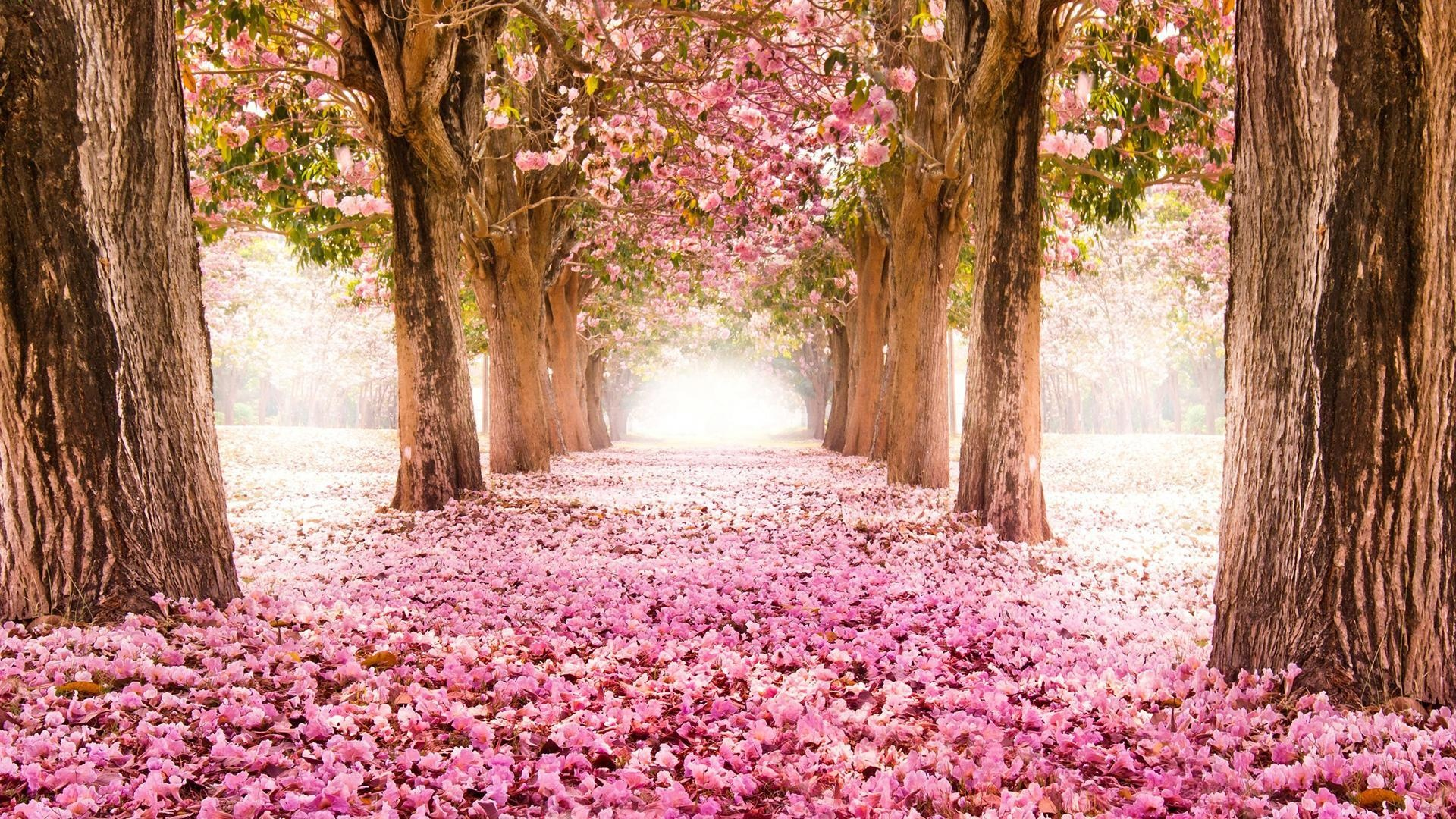 Springtime Wallpaper Picture