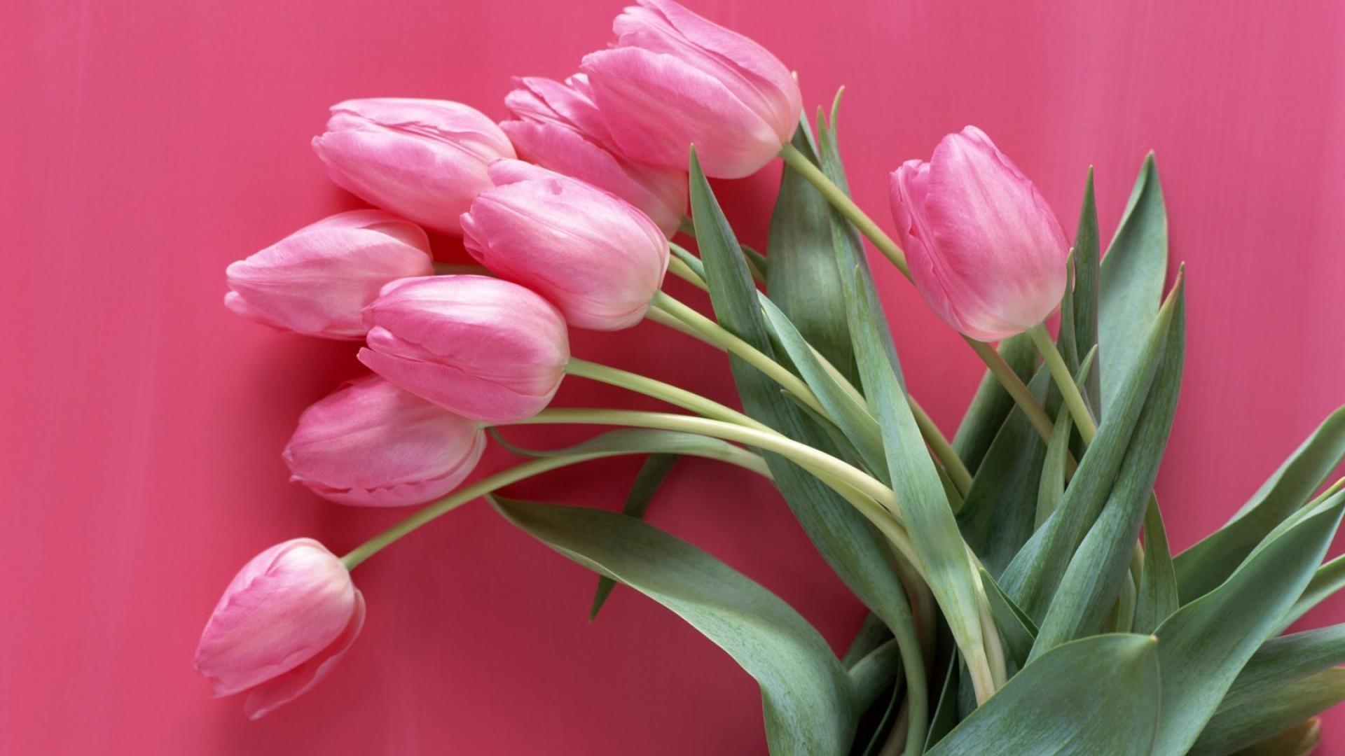 Women's Day Flower hd wallpaper