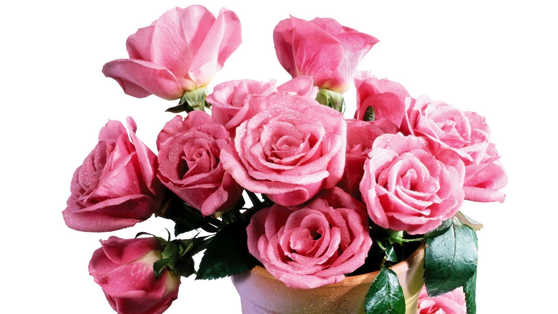 Women's Day Roses free image
