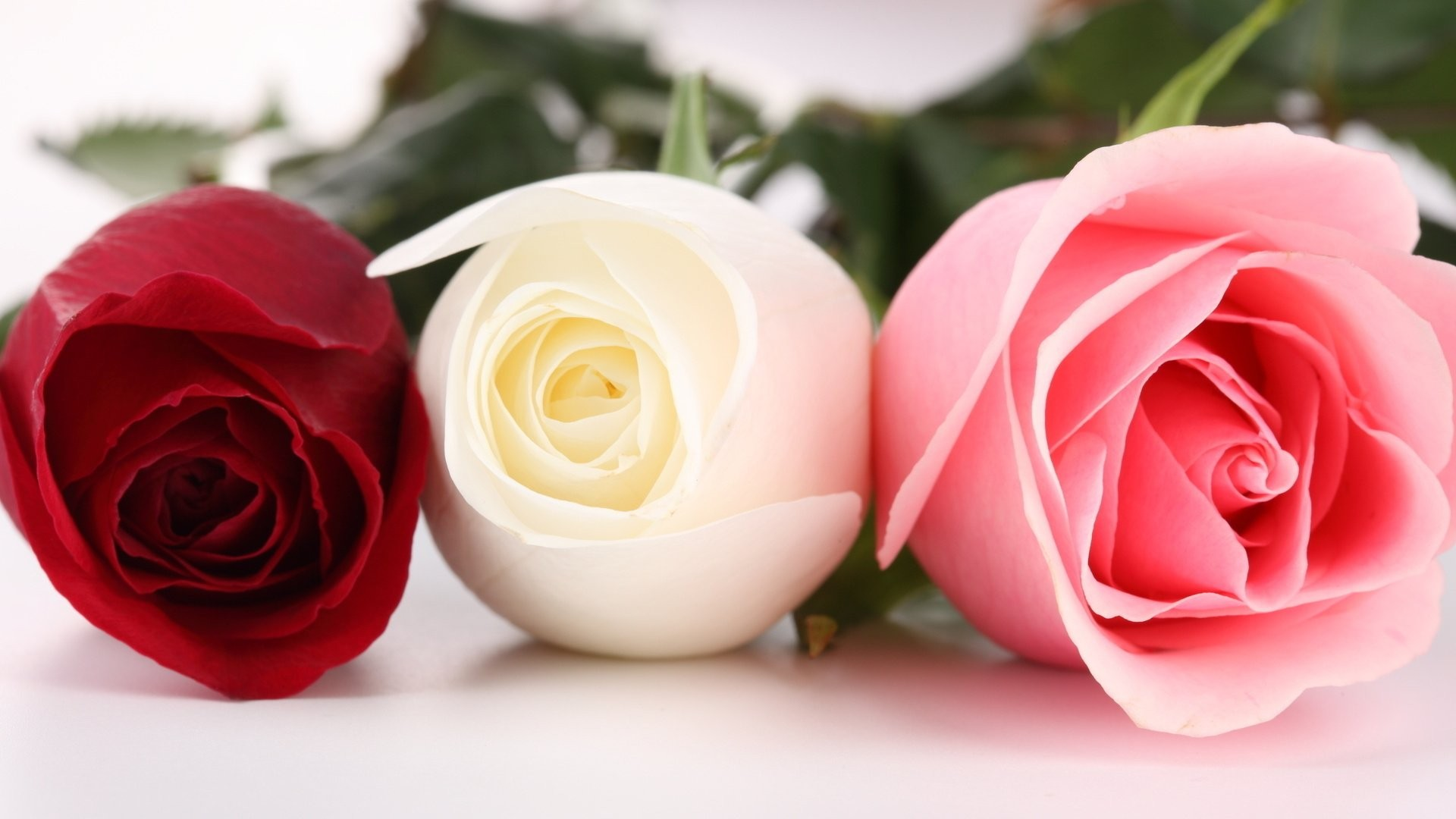 Women's Day Roses hd image download