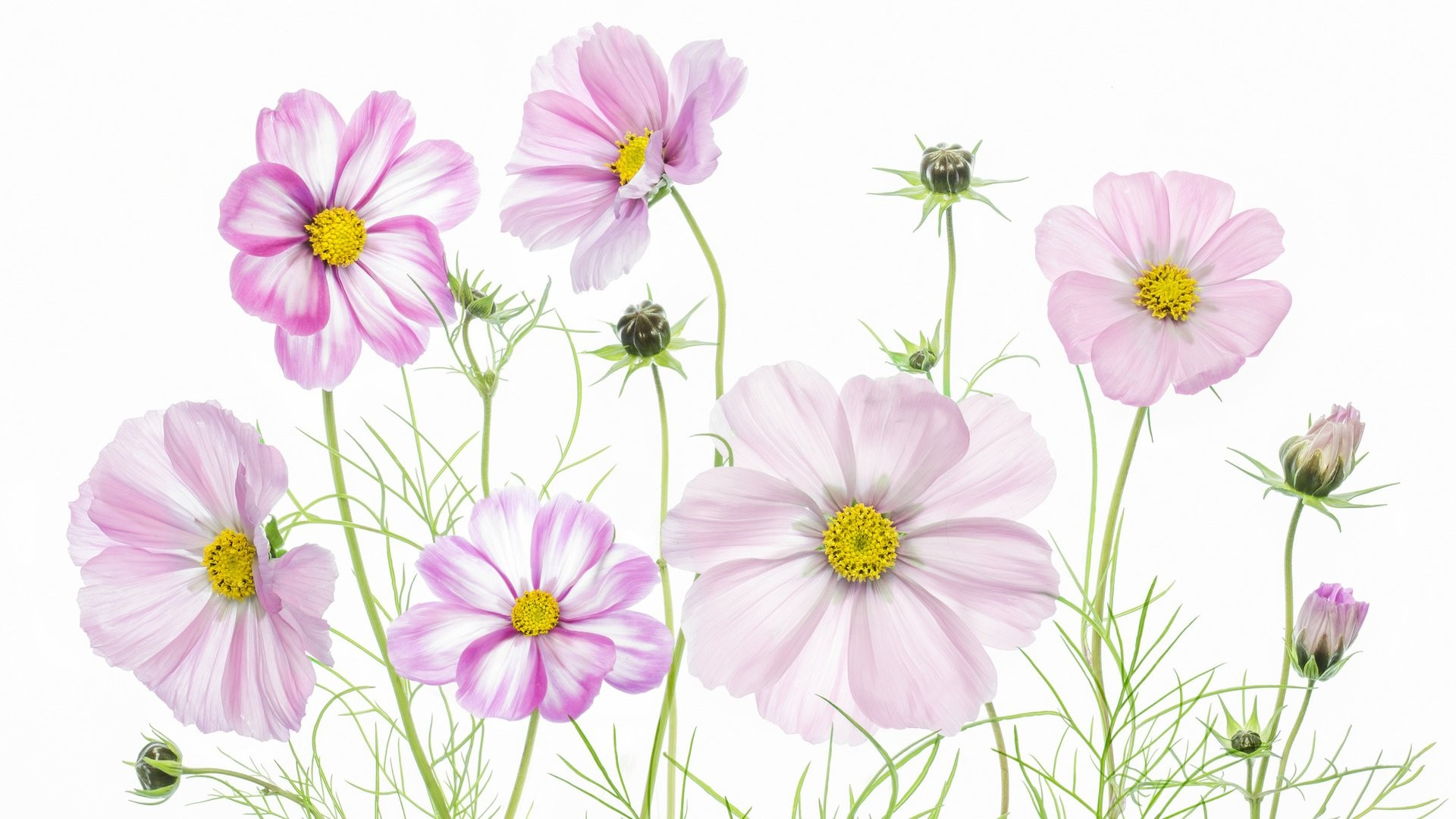 Women's Day Vector Flowers image theme