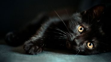 Black Cat free image