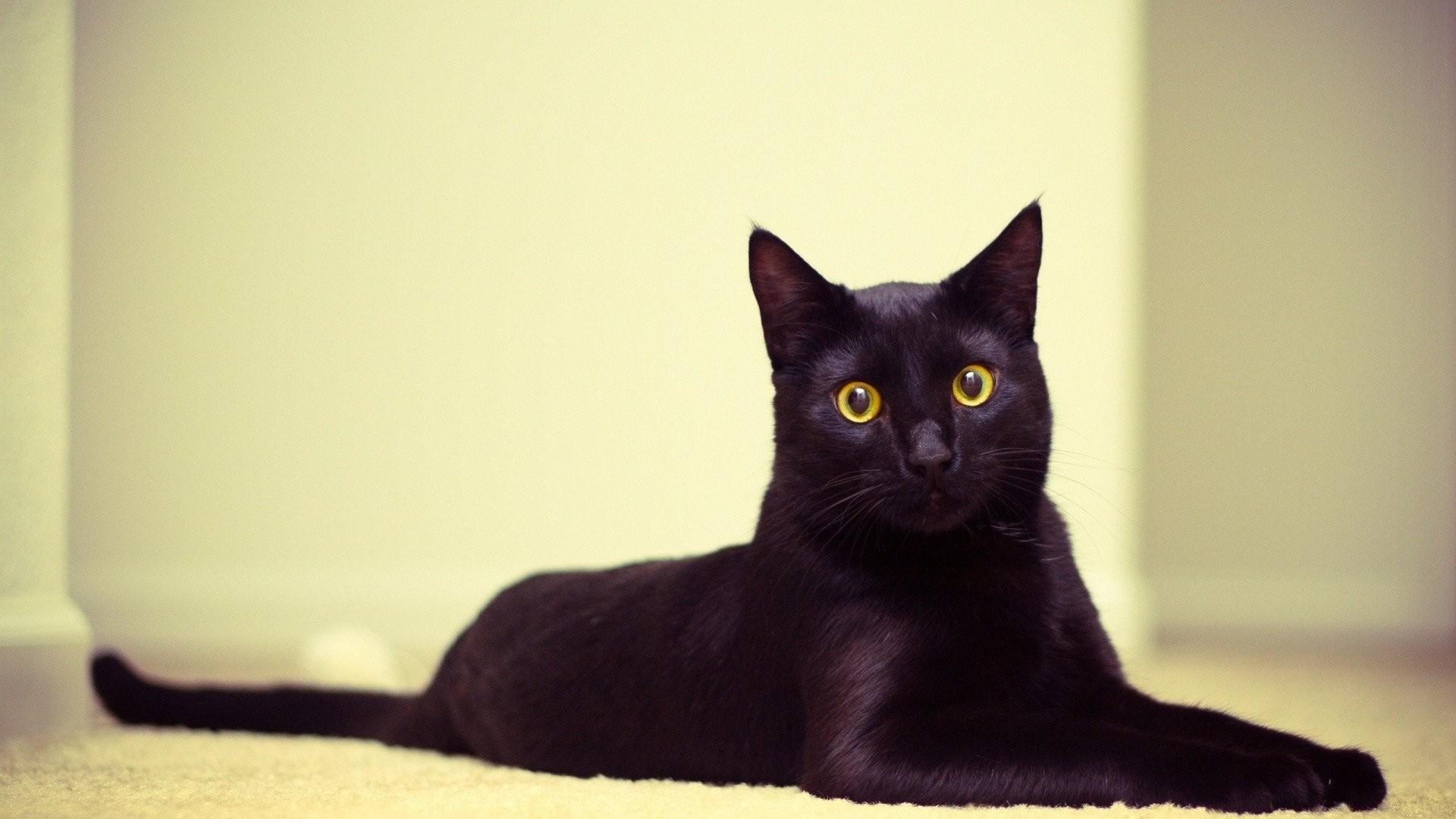 Black Cat computer wallpaper