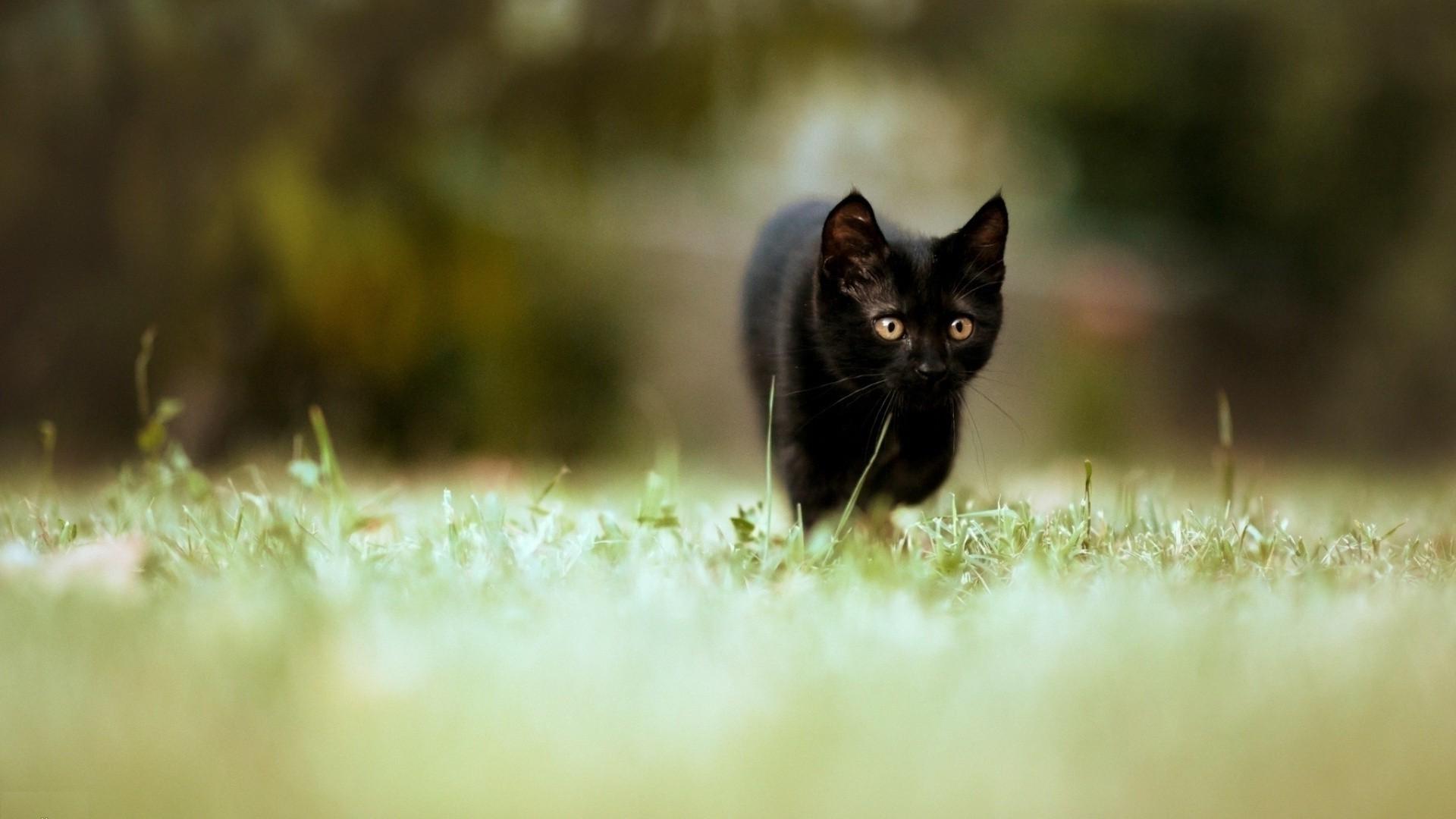 Black Cat 1080p background