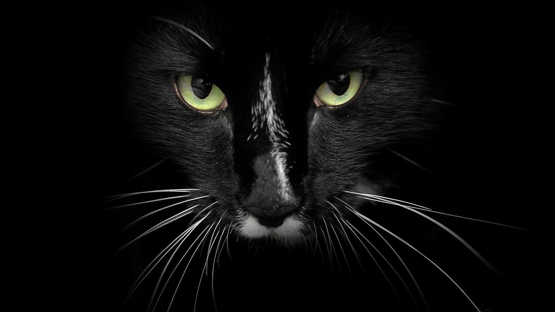 Black Cat desktop background hd