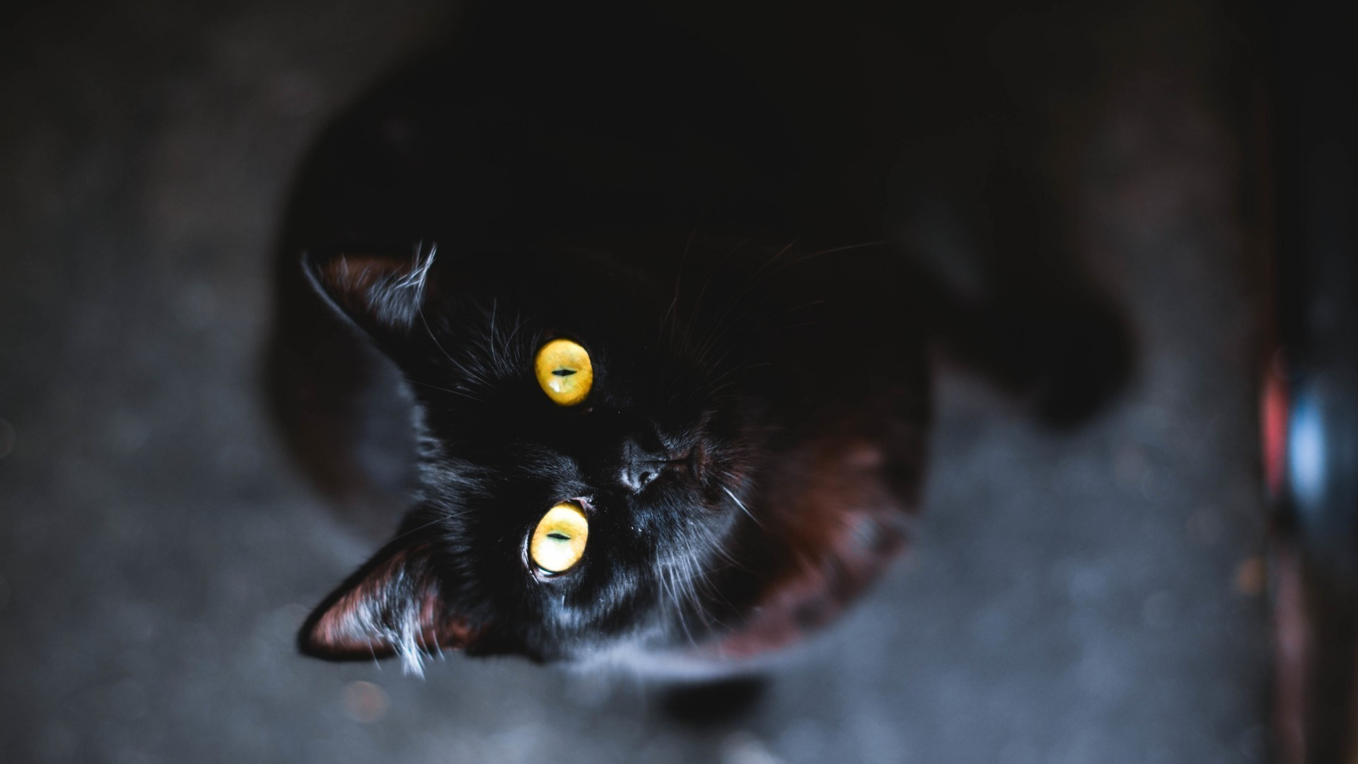 Black Cat full hd wallpaper