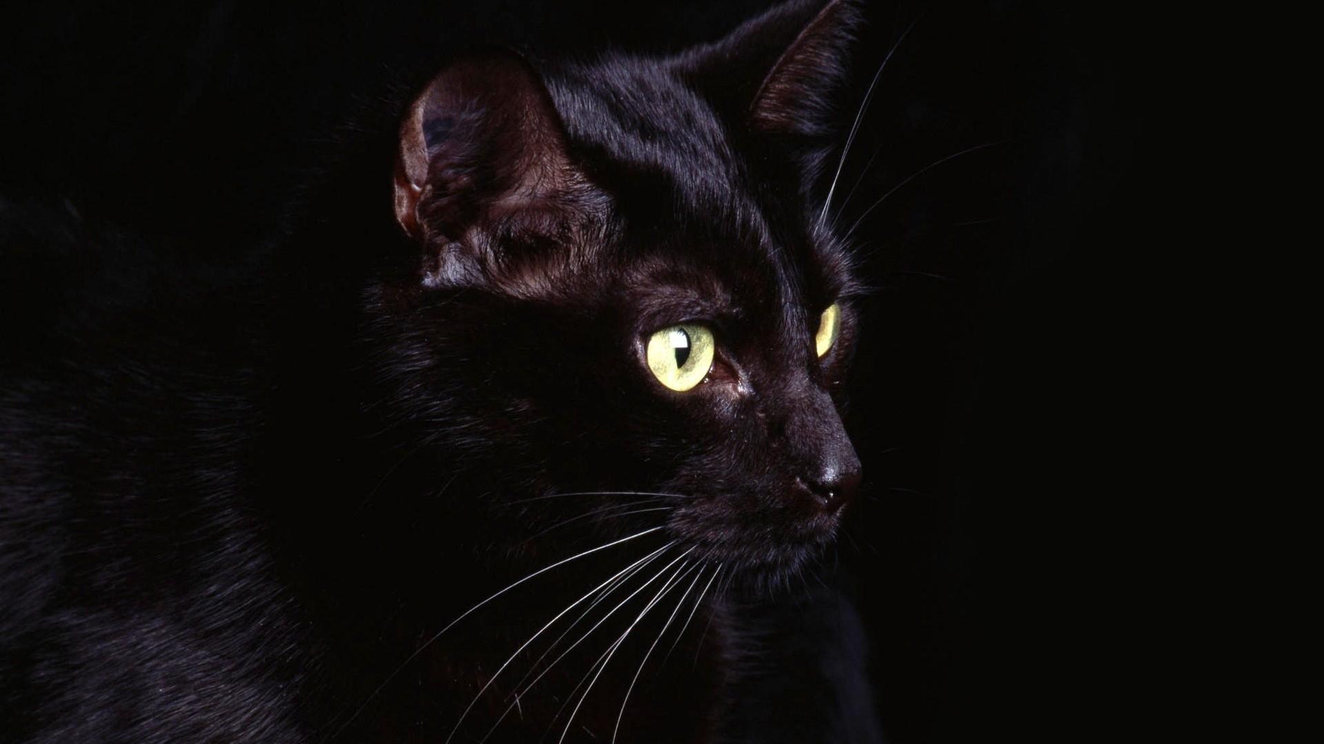 Black Cat background computer