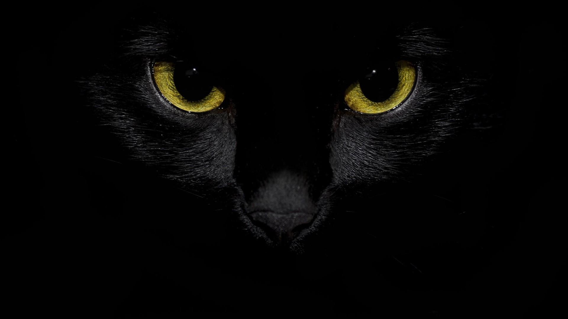 Black Cat free image