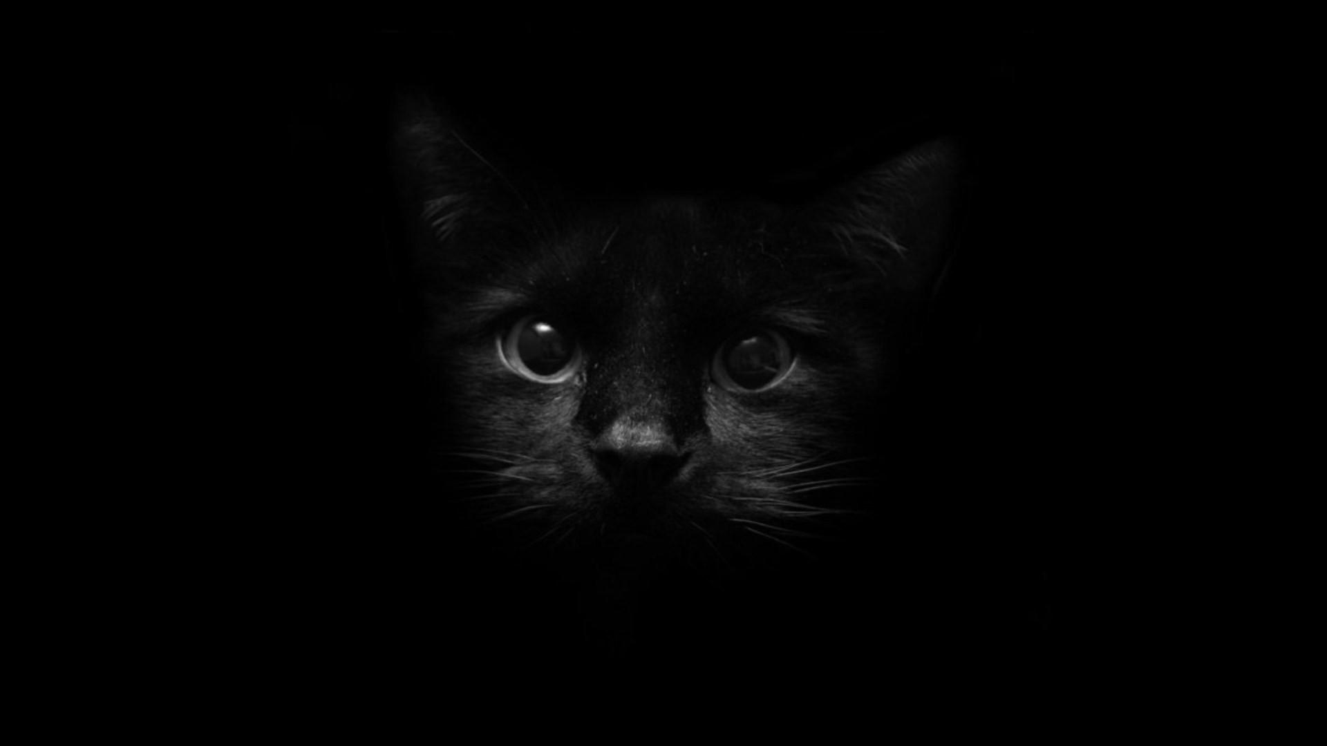 Black Cat 1080p wallpaper