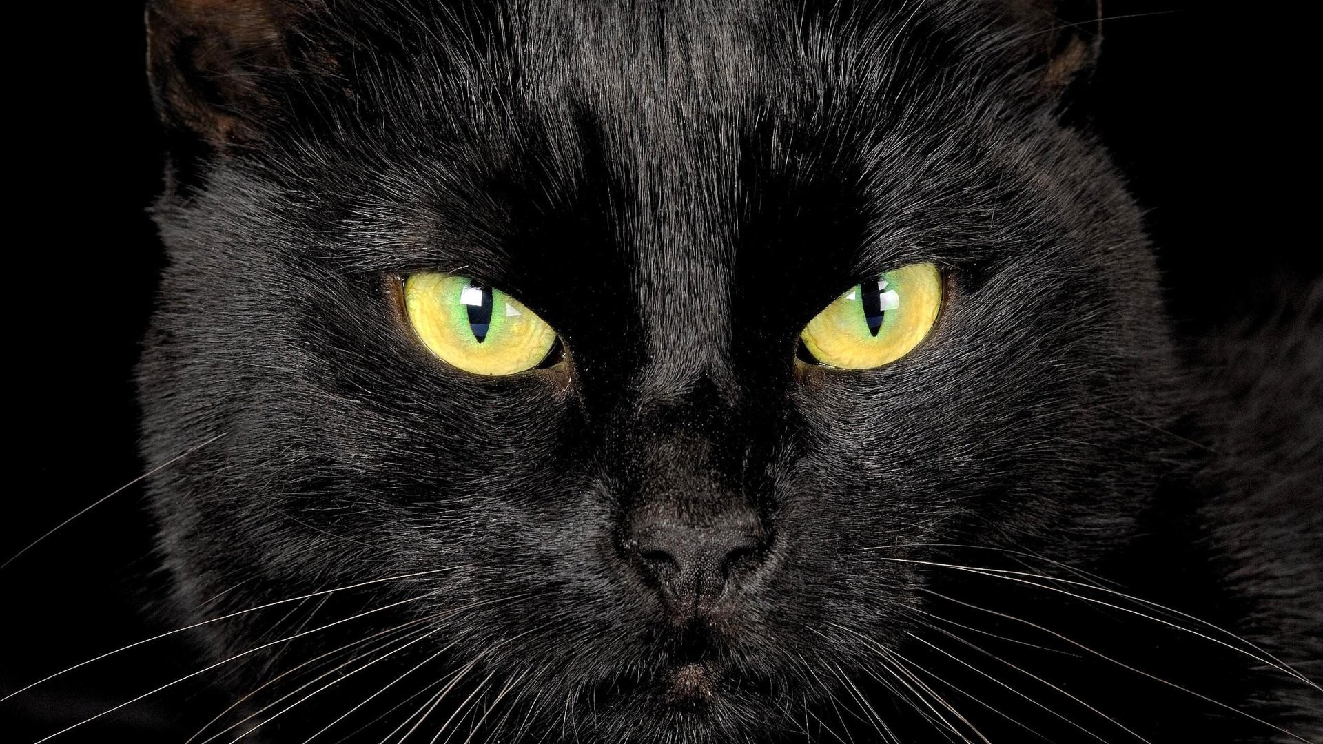Black Cat picture wallpaper