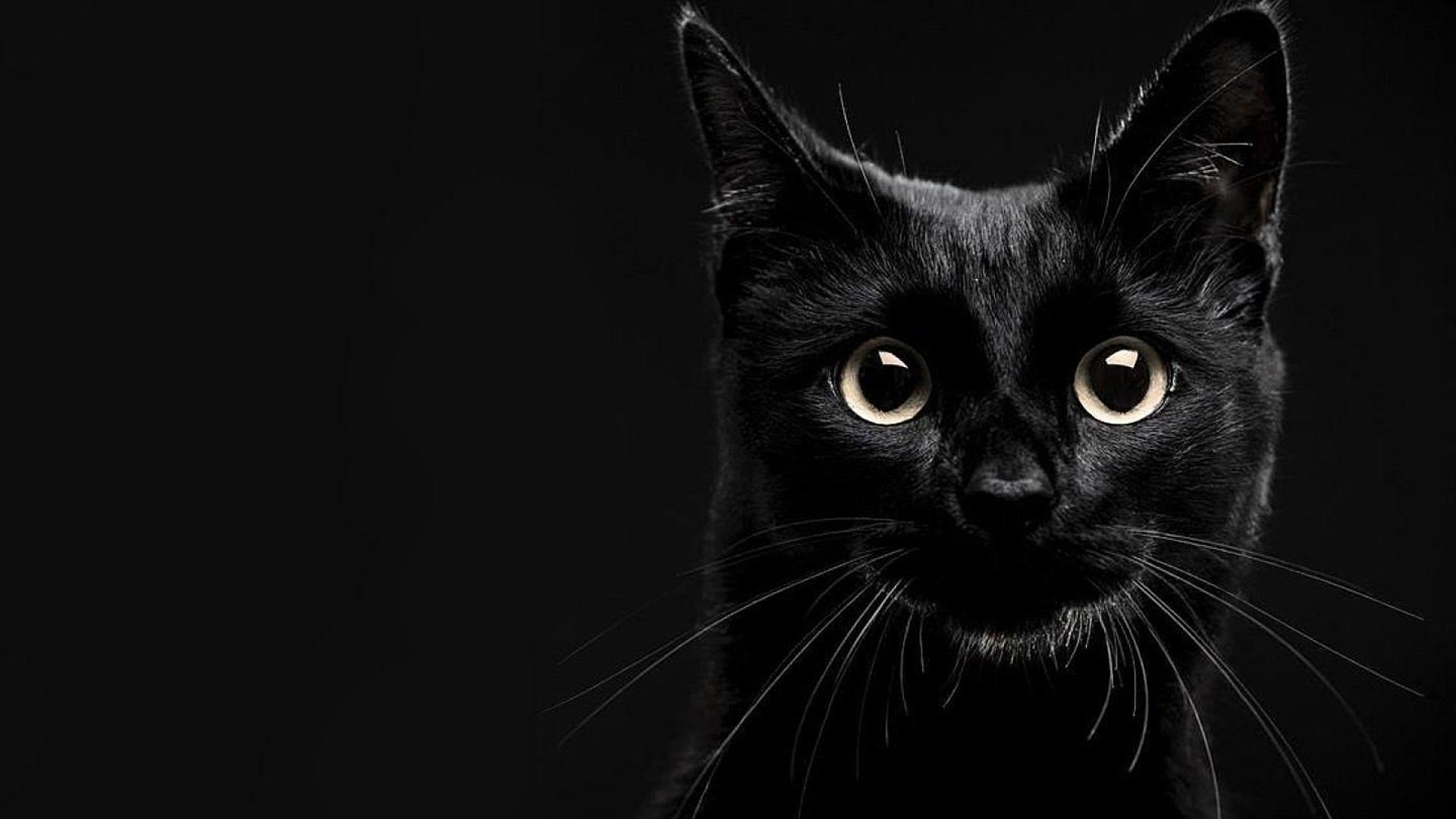 Black Cat free background
