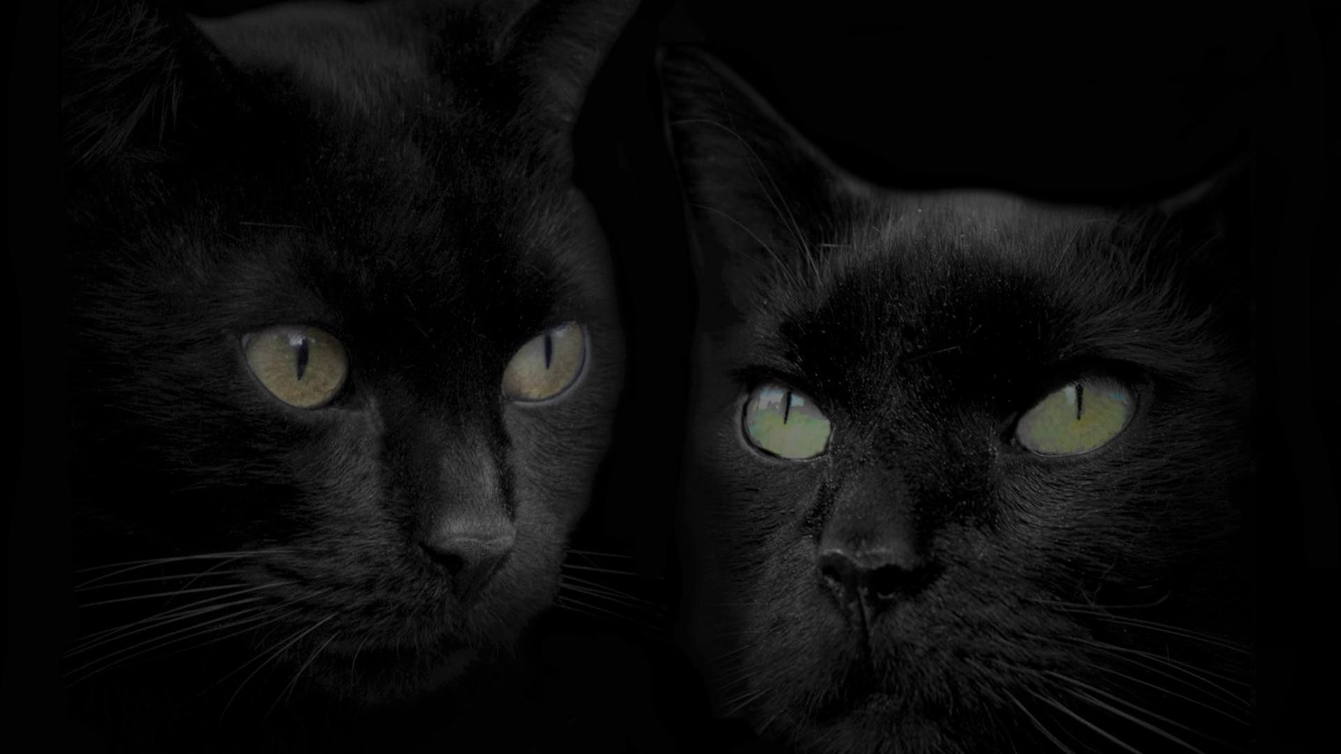Black Cat background hd